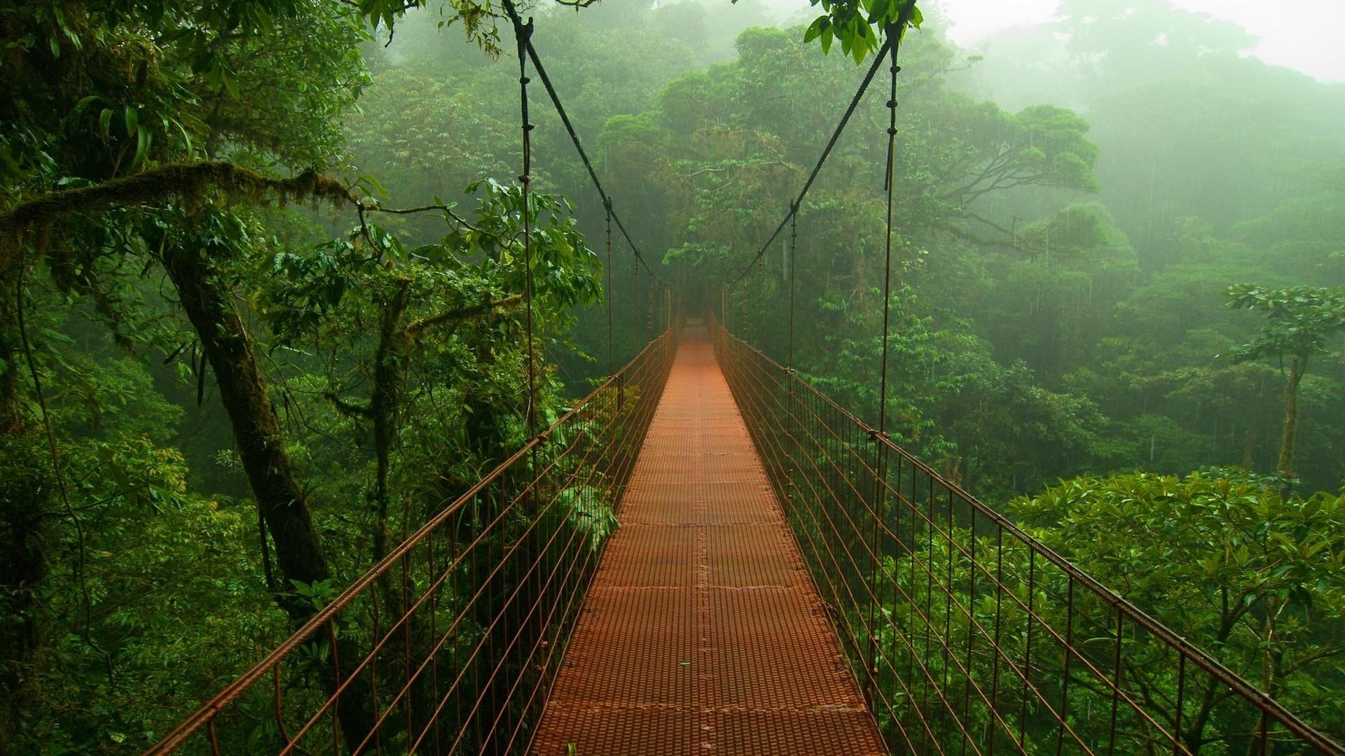 809178-rainforest-wallpaper-1920x1080-screen.jpg