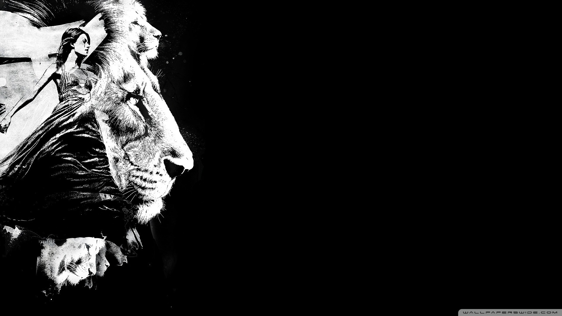Lion Wallpaper Black and White 50 images