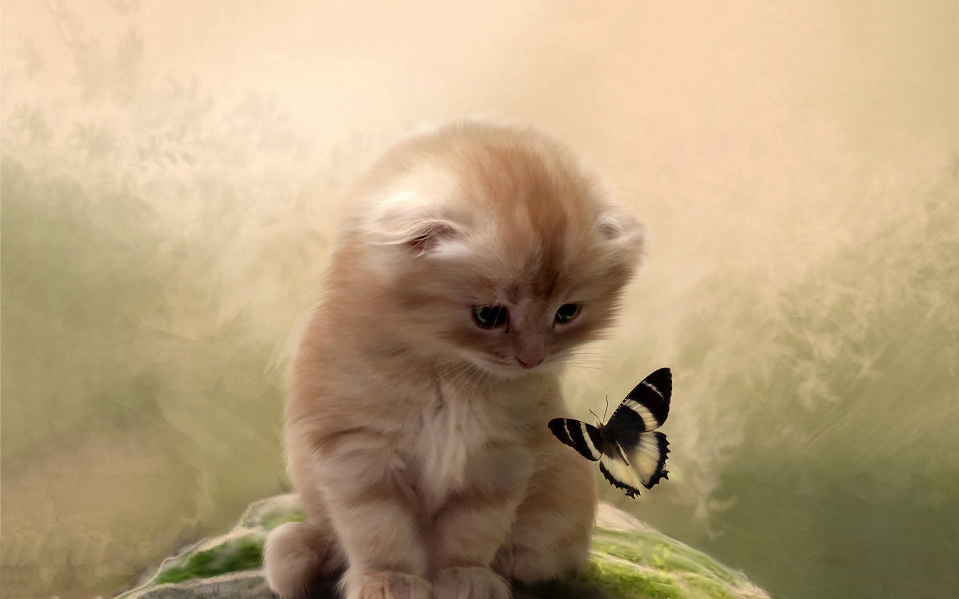 1920x1200 Kitty butterfly Wallpaper in