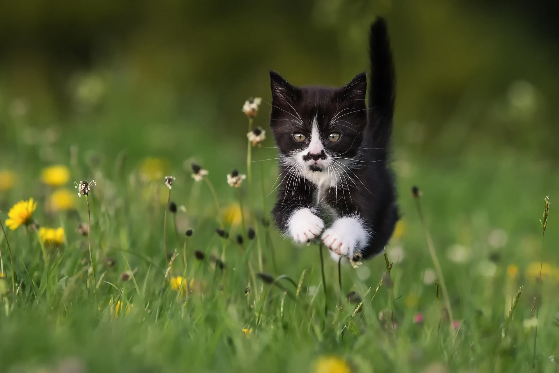 1920x1281 cat kitten grass summer