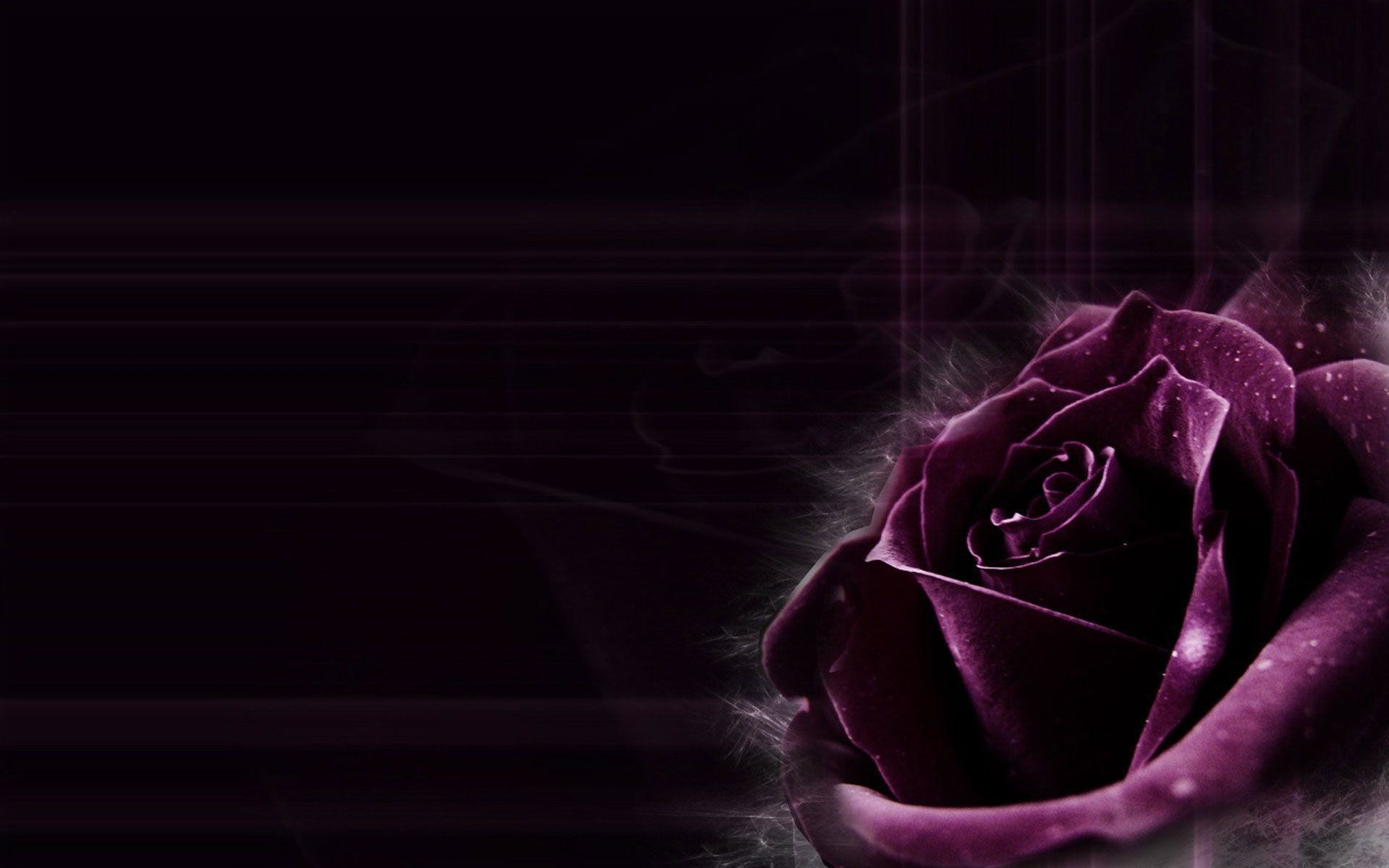 1920x1200 Dark Purple Rose Backgrounds Images & Pictures - Becuo