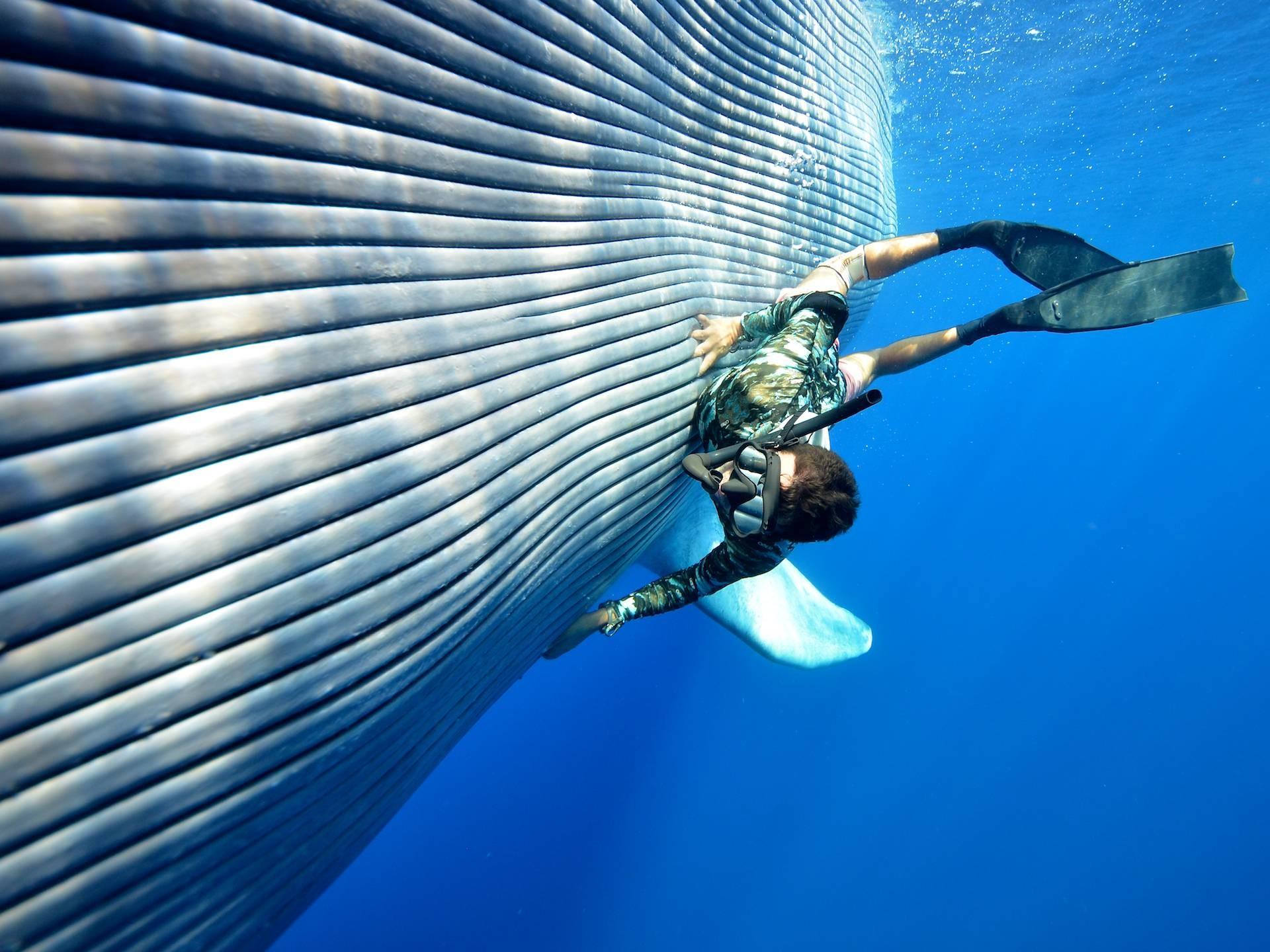 Blue Whale Wallpaper 60 Images