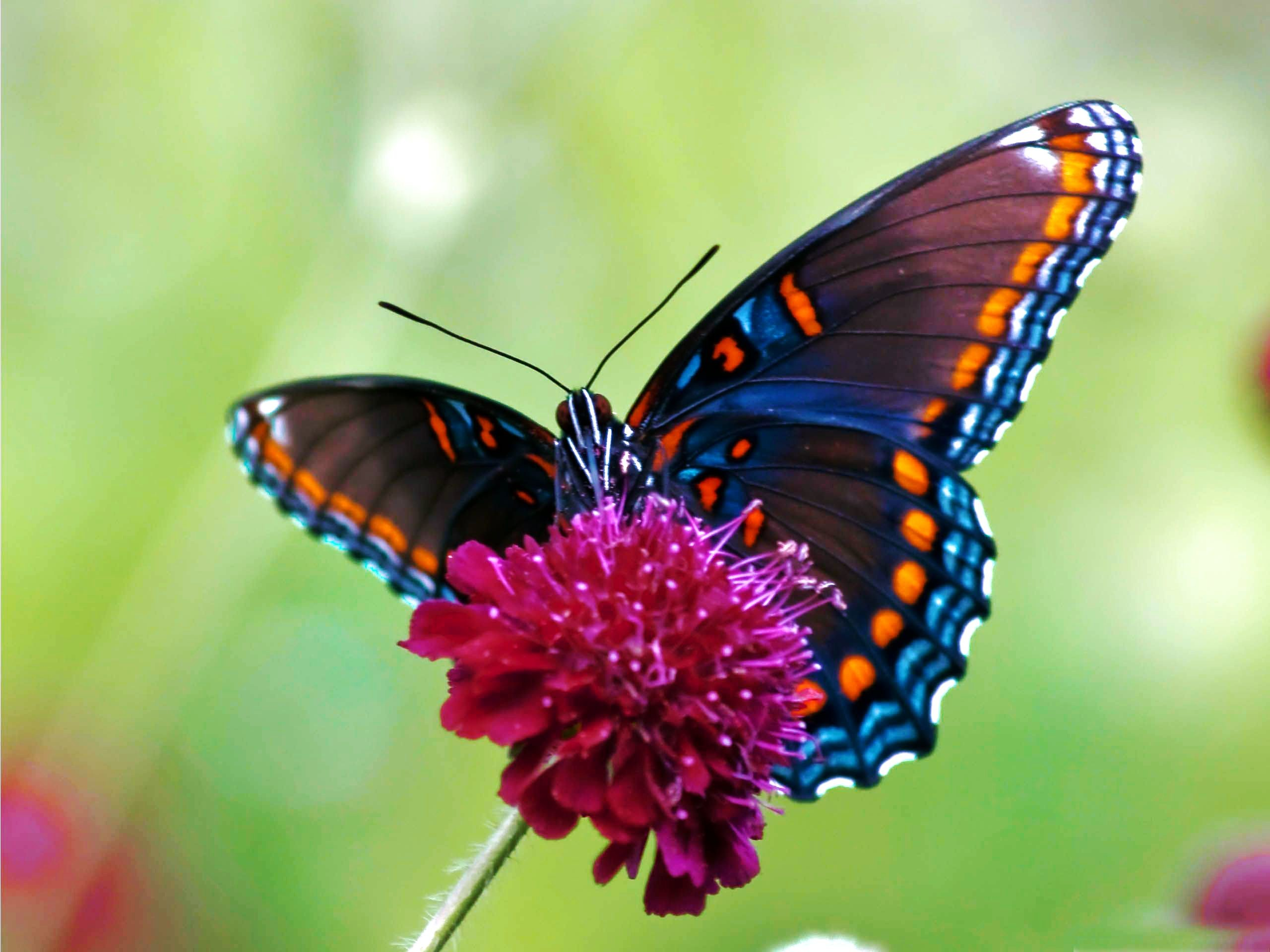 2560x1920 Illustrations Of Butterflies | HD Colorful Butterfly Wallpaper