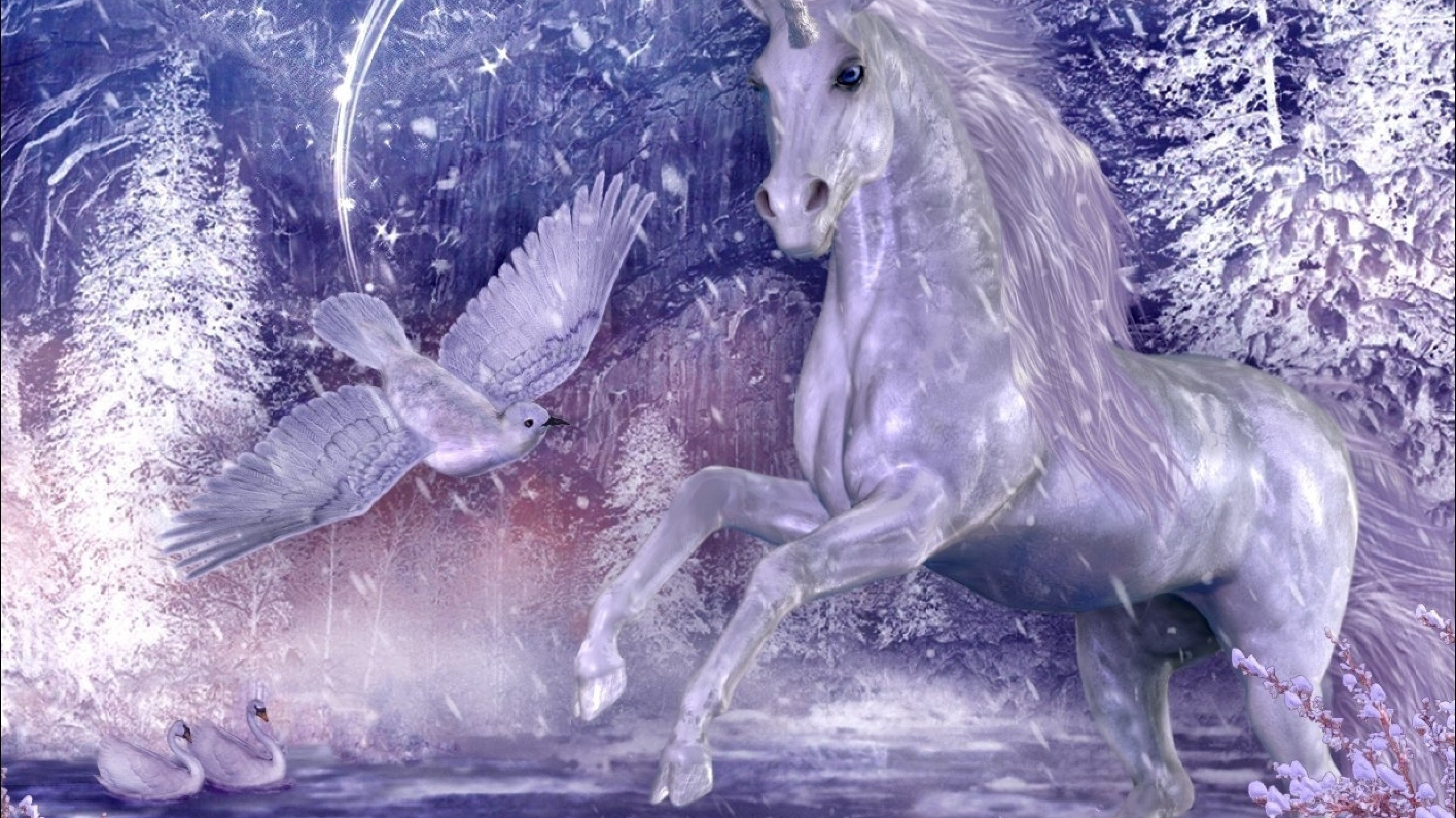 2560x1440 HD Unicorn Wallpaper and Desktop Background Back Wallpapers