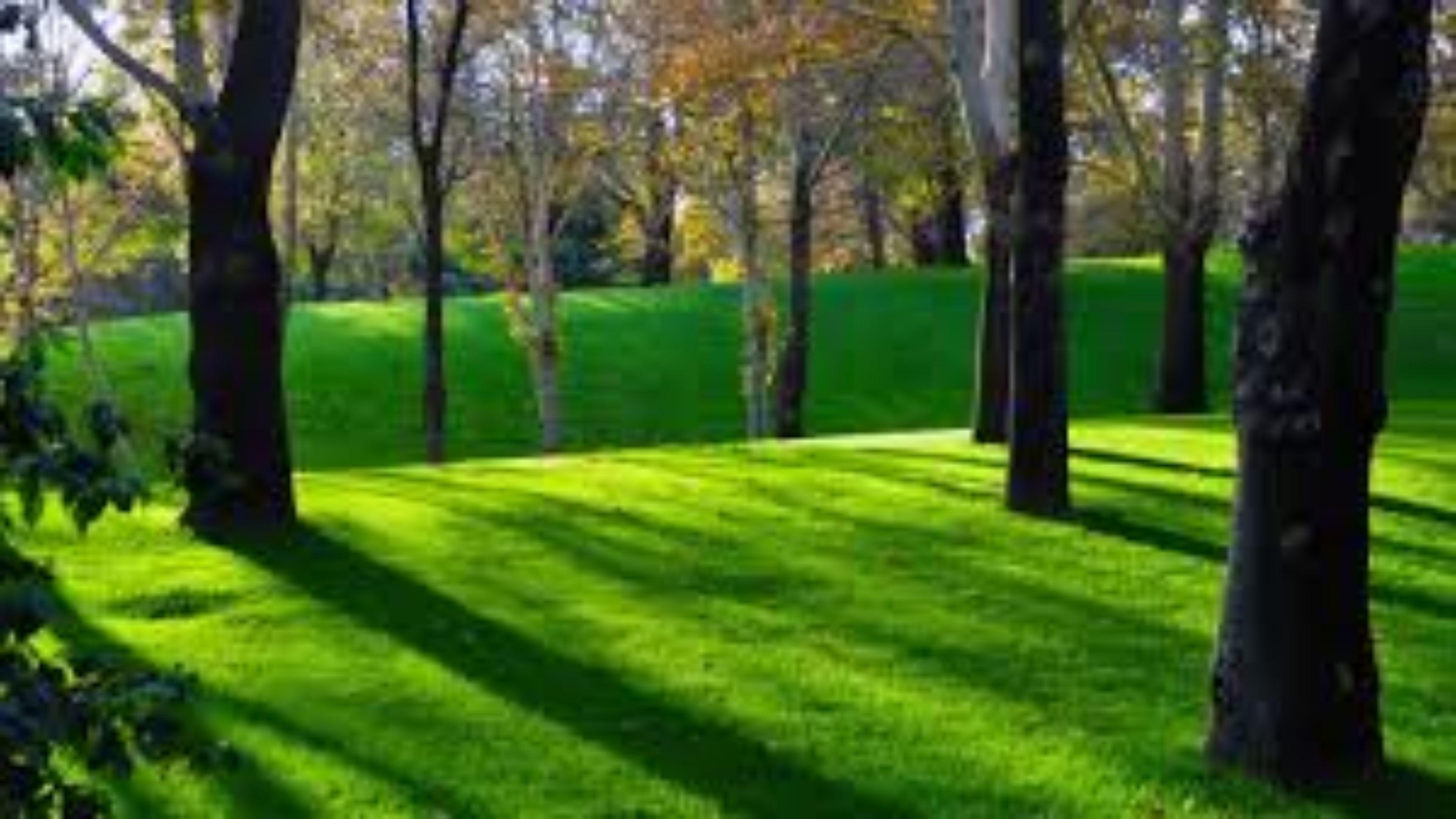 1920x1080 Hd Wallpaper Nature Green