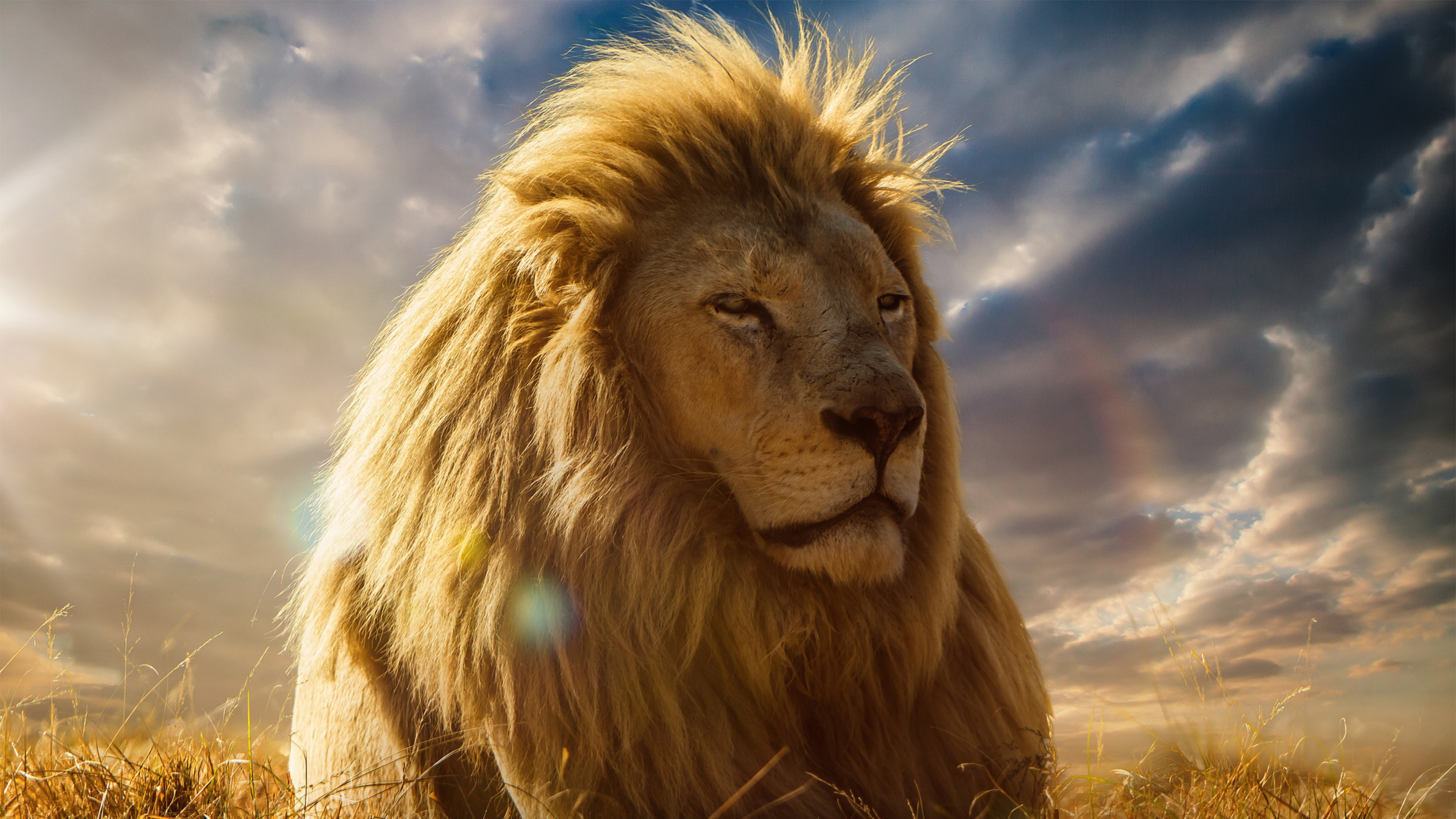 3840x2160 Preview wallpaper lion, king of beasts, mane, savannah