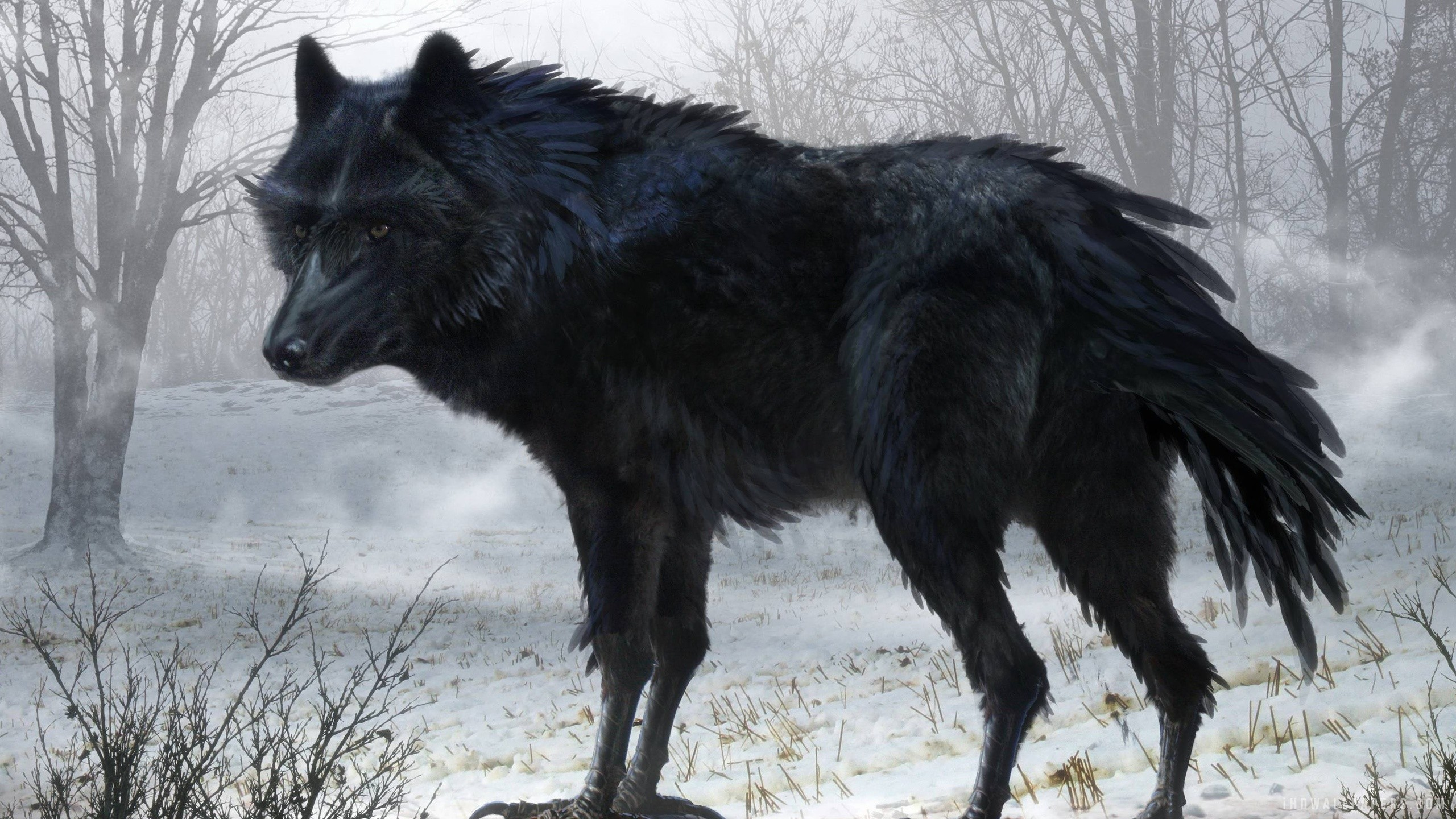 2560x1440 Black Wolf Art HD Wallpaper - iHD Wallpapers