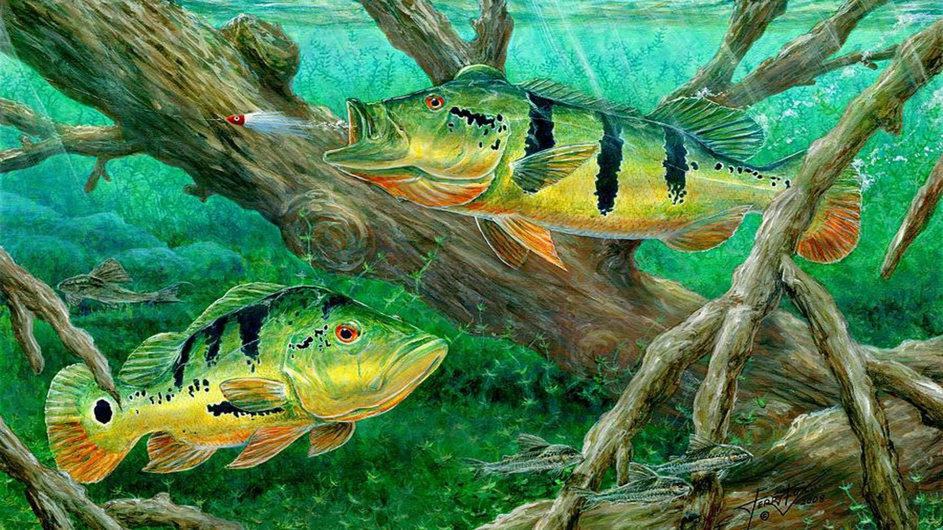 Fishing backgrounds 61 images for Bass fish images