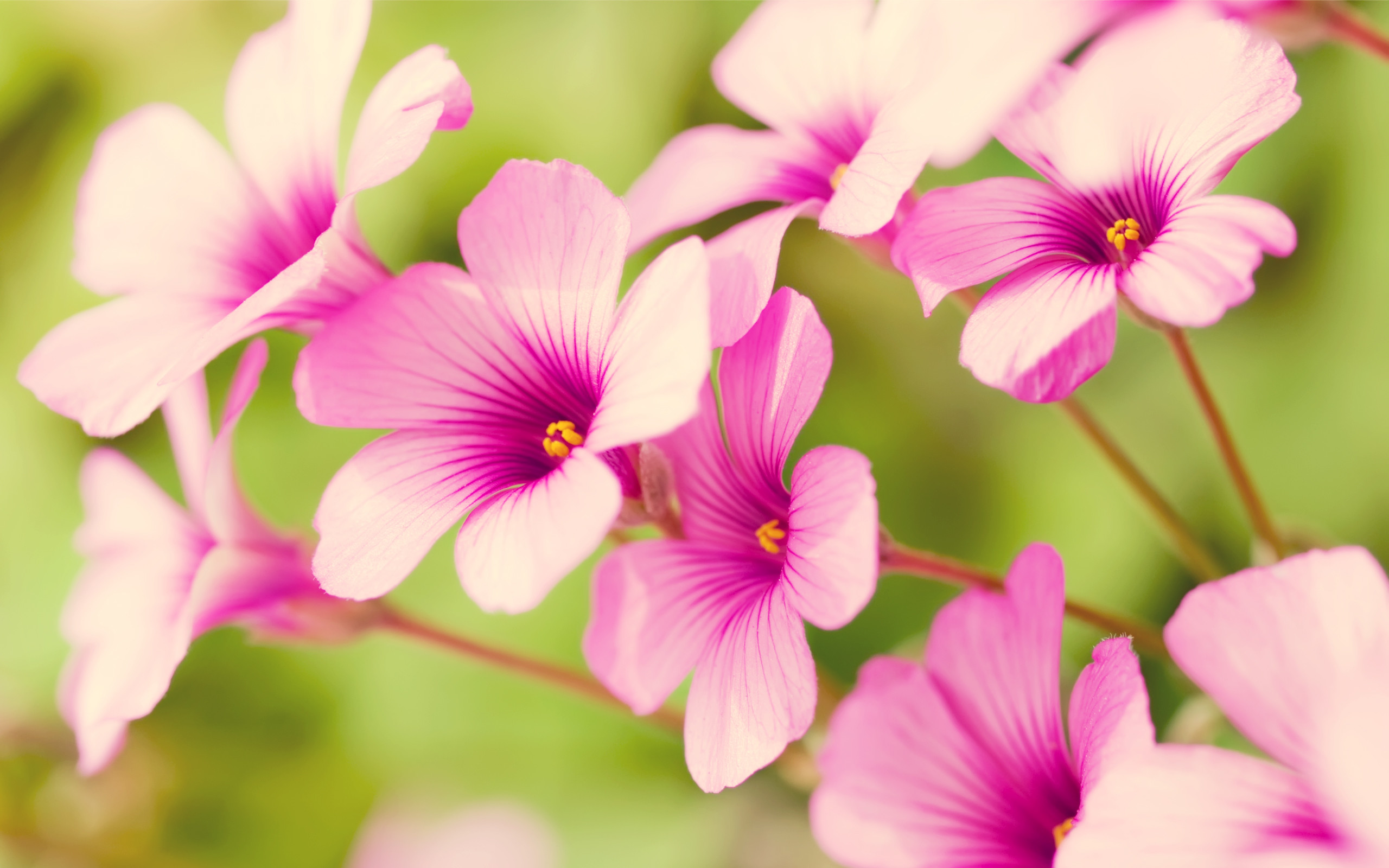 Pretty Flower Wallpaper 49 Images
