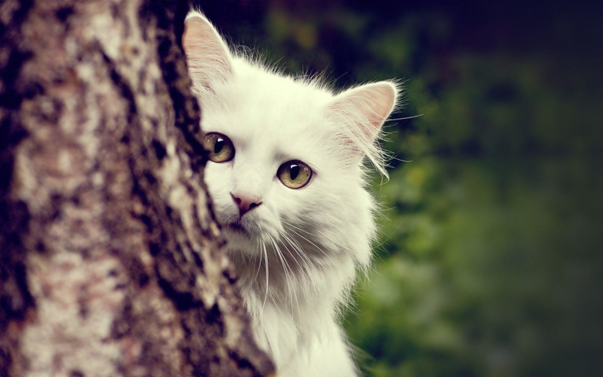 White Cats Wallpaper (75+ images)