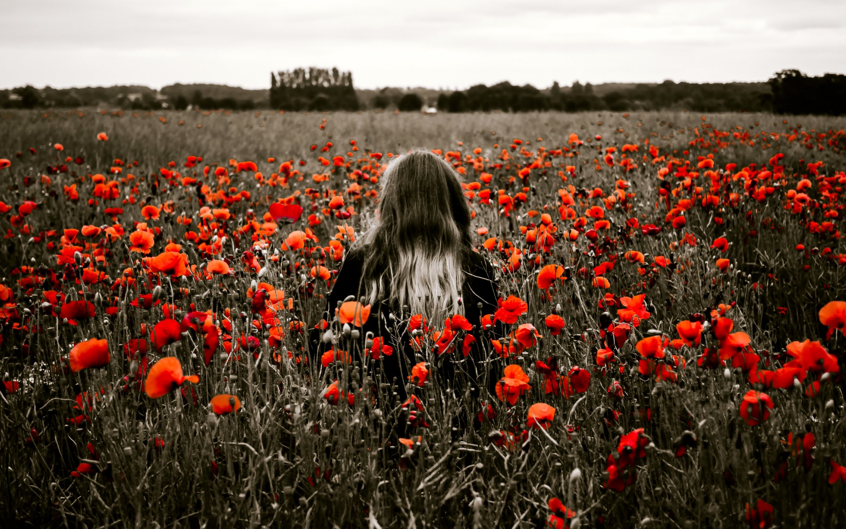 field of poppies wallpaper (50+ images)