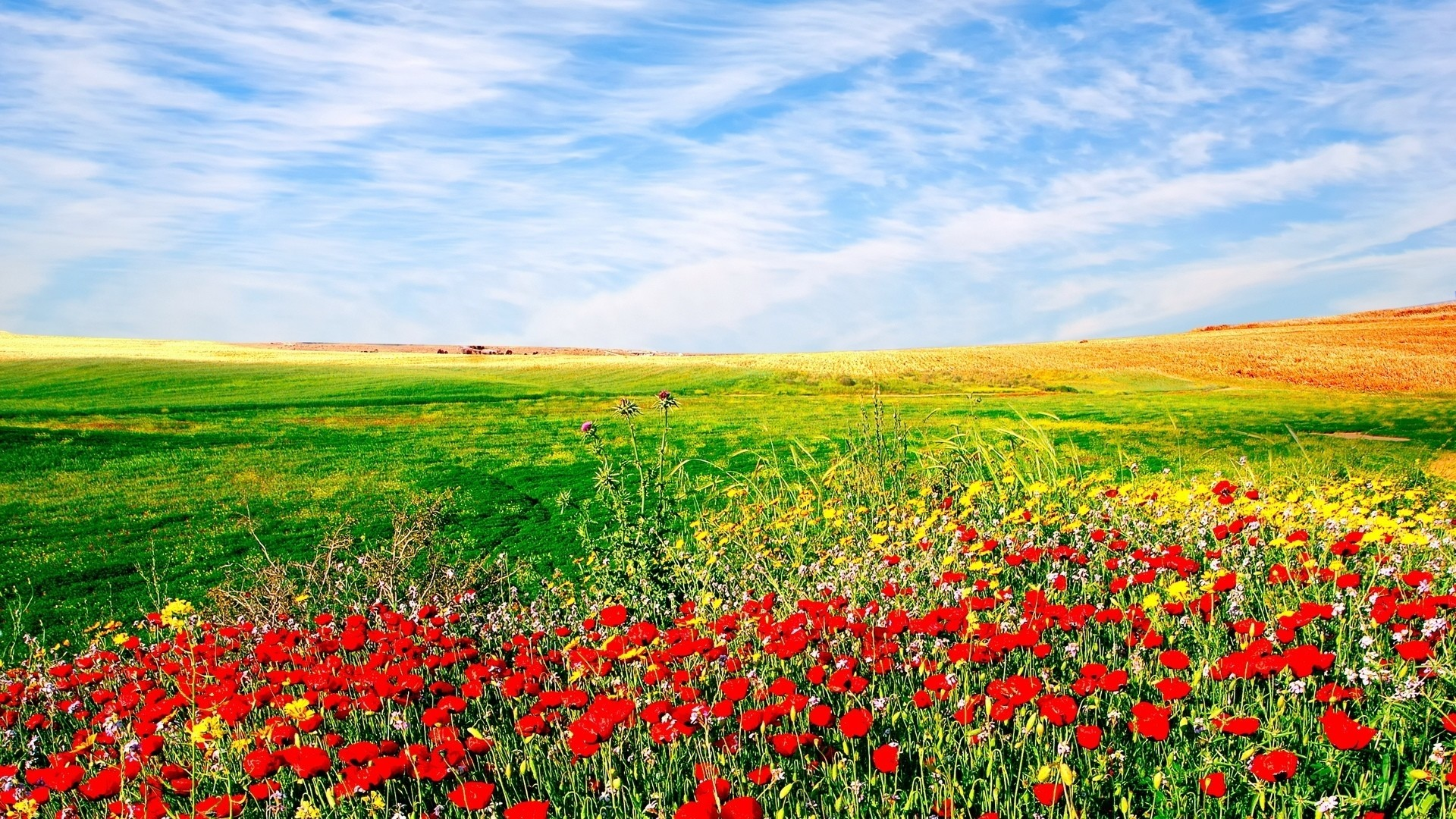 1920x1080 Awesome Flower Field Wallpaper Download Computer