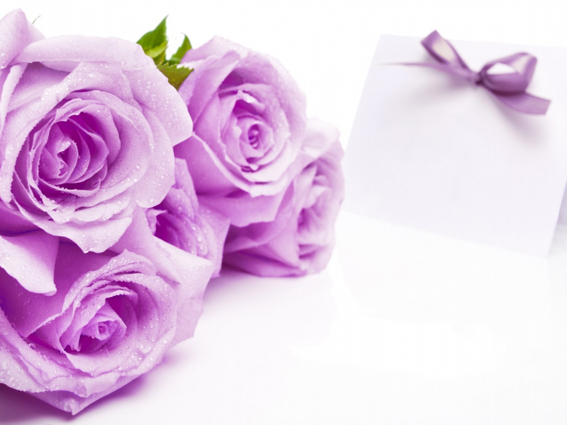 1920x1440 ... Purple Rose Wallpaper Purple Rose Wallpapers HD ...