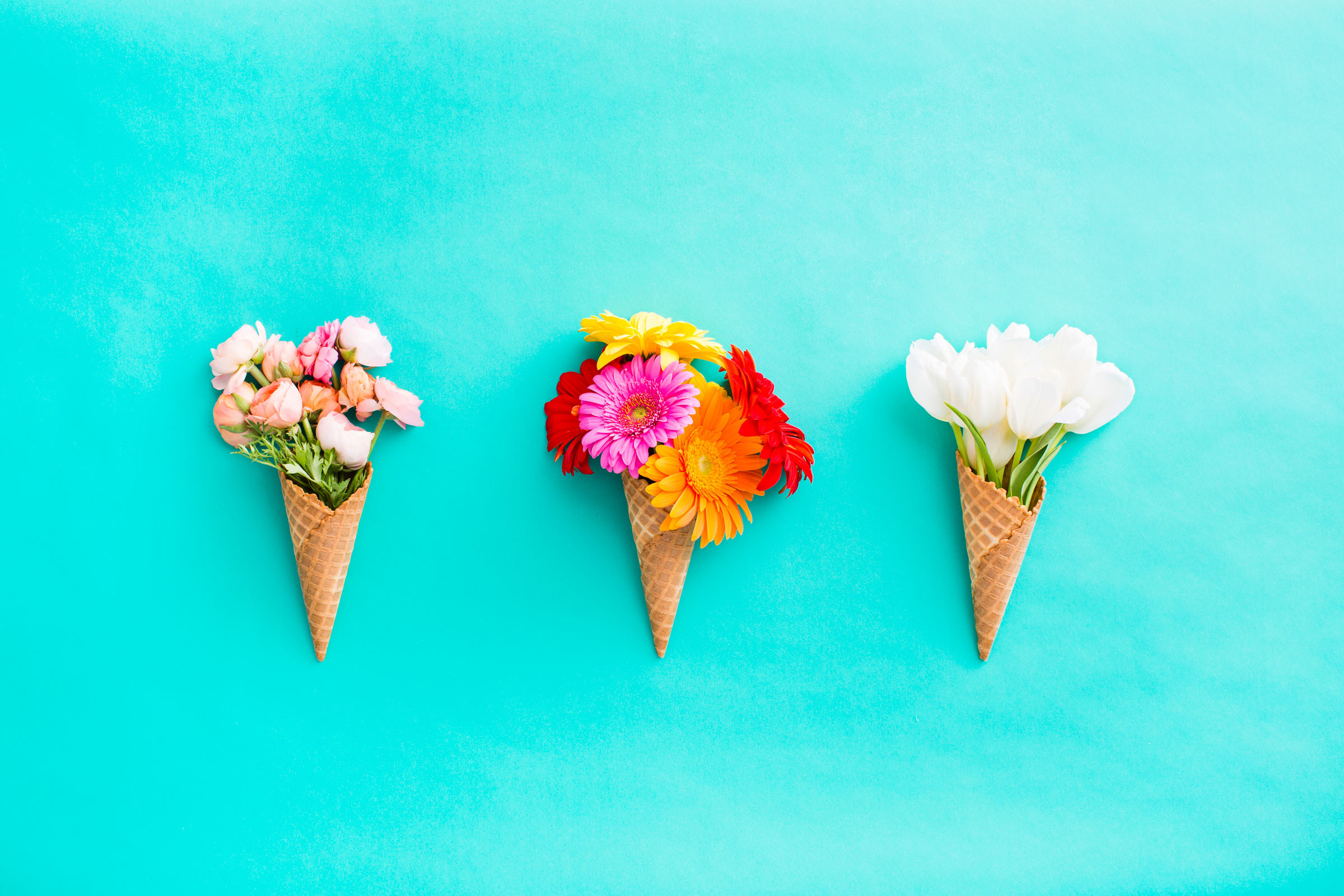 2400x1600 Download Floral Cones All In A Row