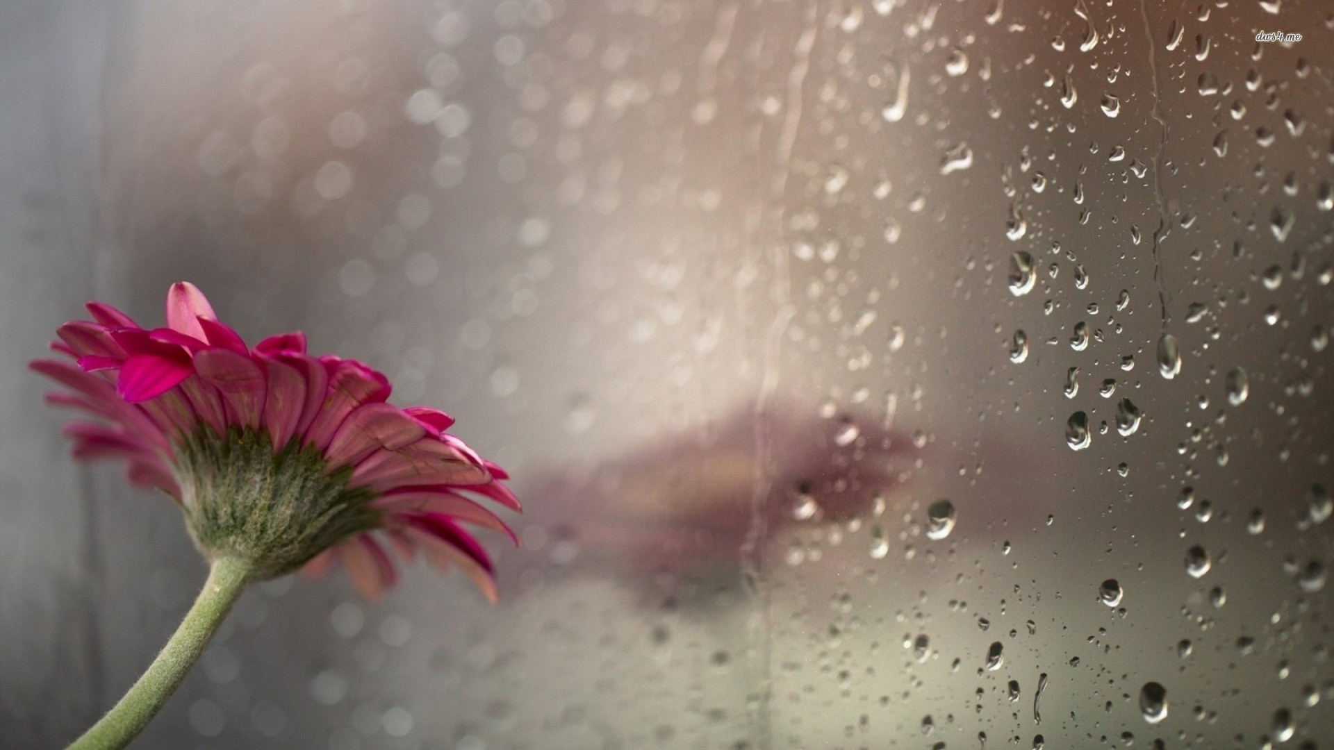 Beautiful rain drops wallpapers with quotes 52 images - Rainy hd wallpaper for pc ...