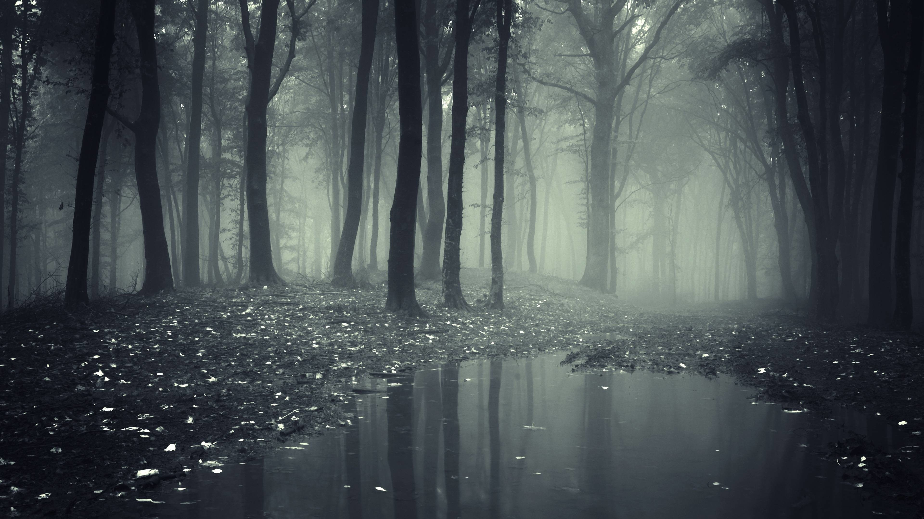 3840x2160 Creepy Dark Forest HD Wallpapers