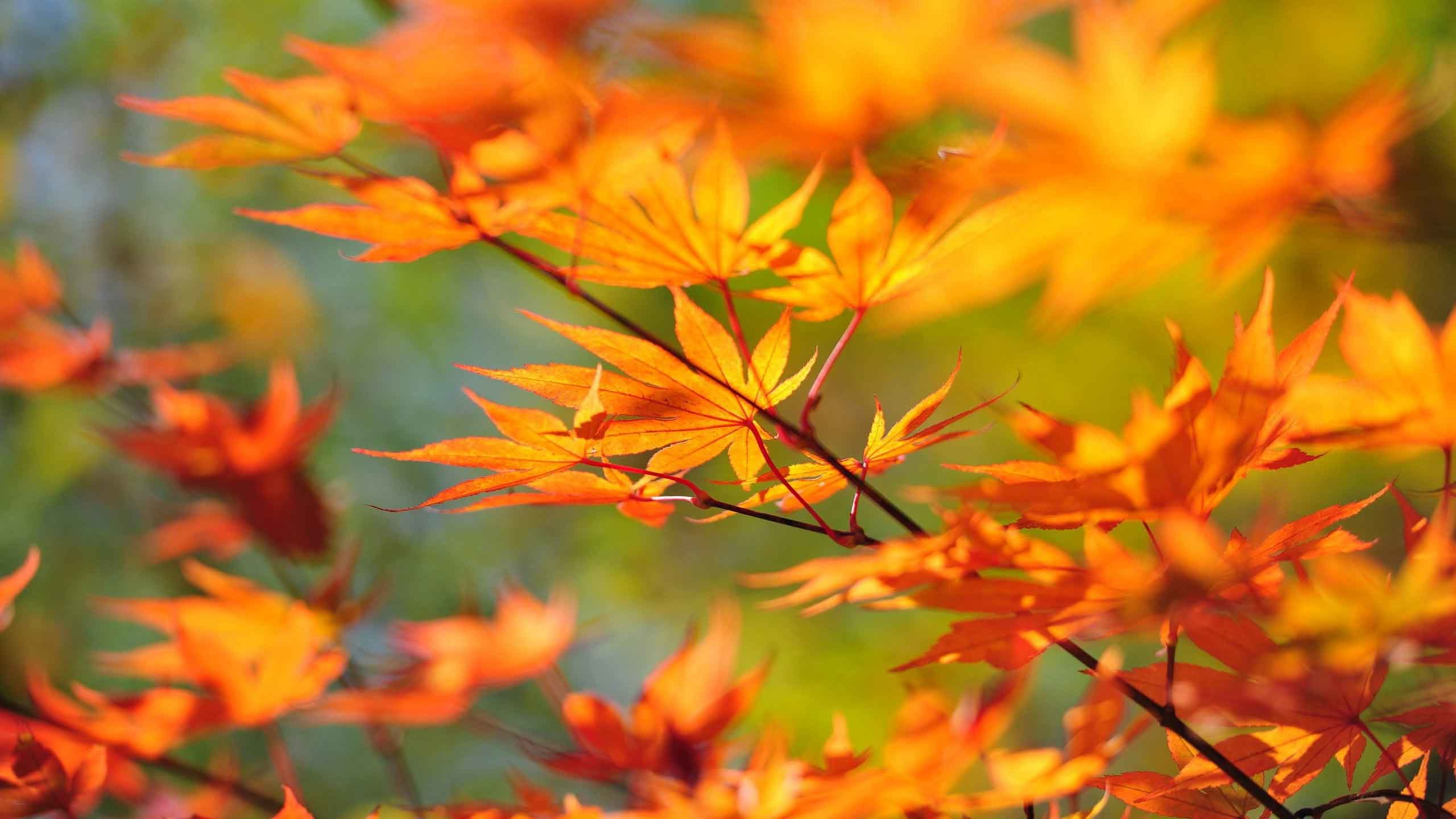Autumn Leaf Wallpaper (68+ Images