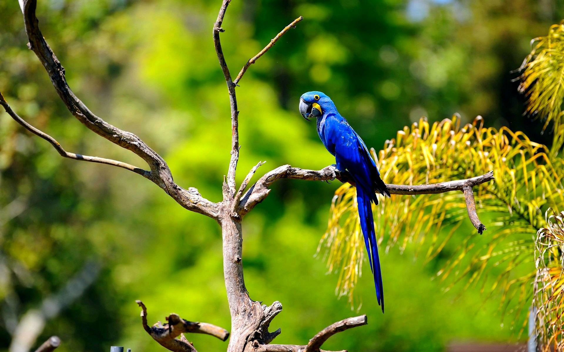 Macaw parrot wallpaper 67 images 1920x1200 most beautiful blue macaw parrot hd pictures voltagebd Images