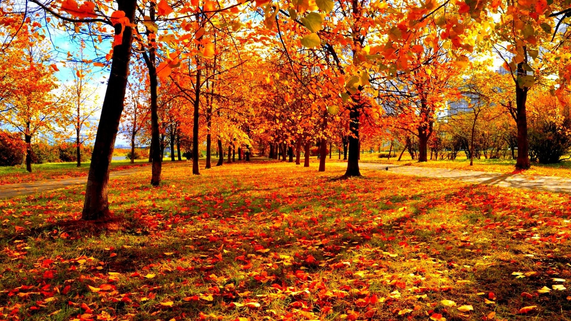 Wallpaper fall season 49 images 2560x1440 voltagebd Choice Image