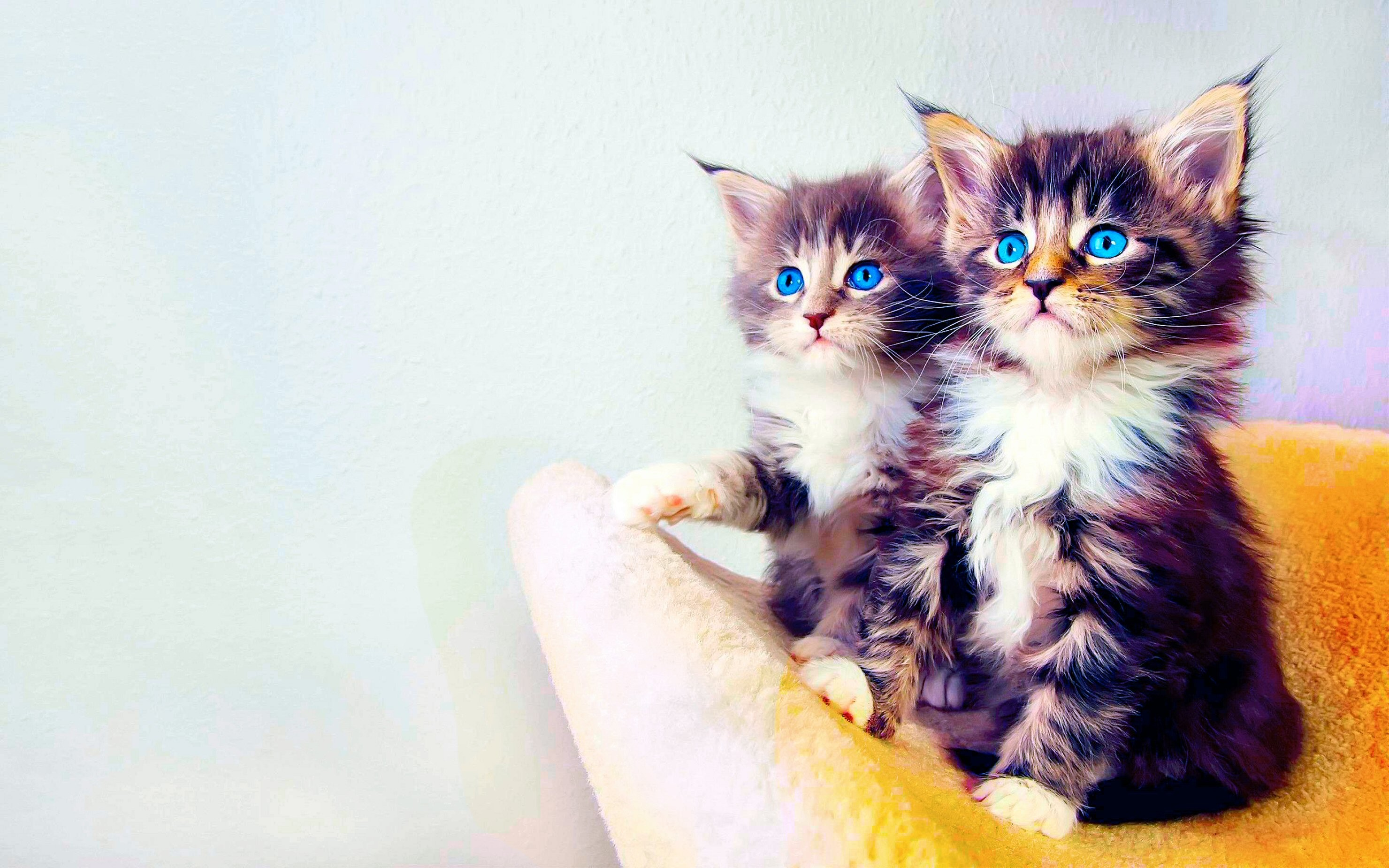 2960x1850 Animal Cat Kitten · HD Wallpaper | Background ID:334727