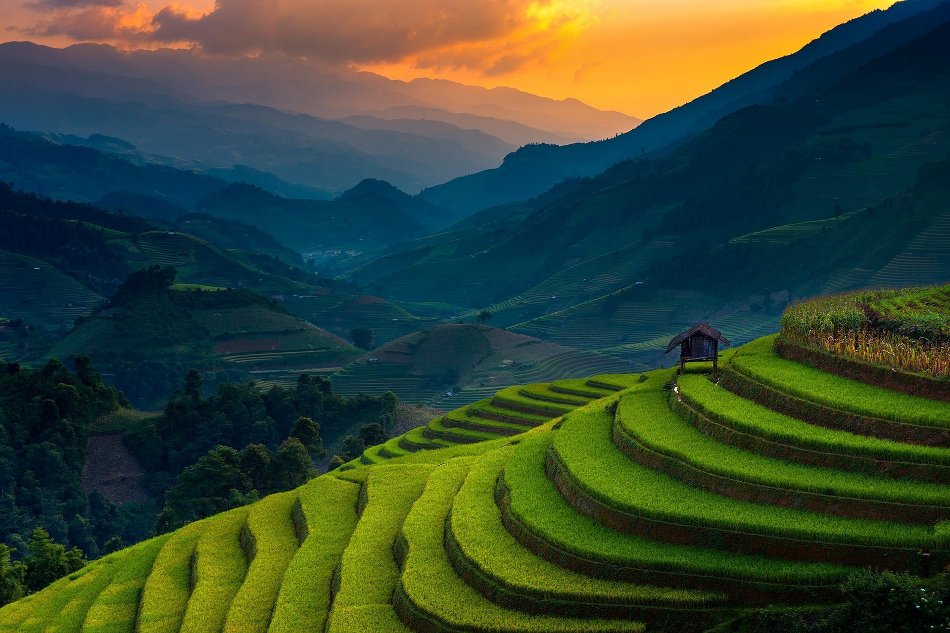 1920x1280 landscape, Nature, Rice Paddy, Terraces, Mountain, Sunset, Field, Trees,  Mist, Green, Hut, Vietnam, Sunlight Wallpapers HD / Desktop and Mobile  Backgrounds