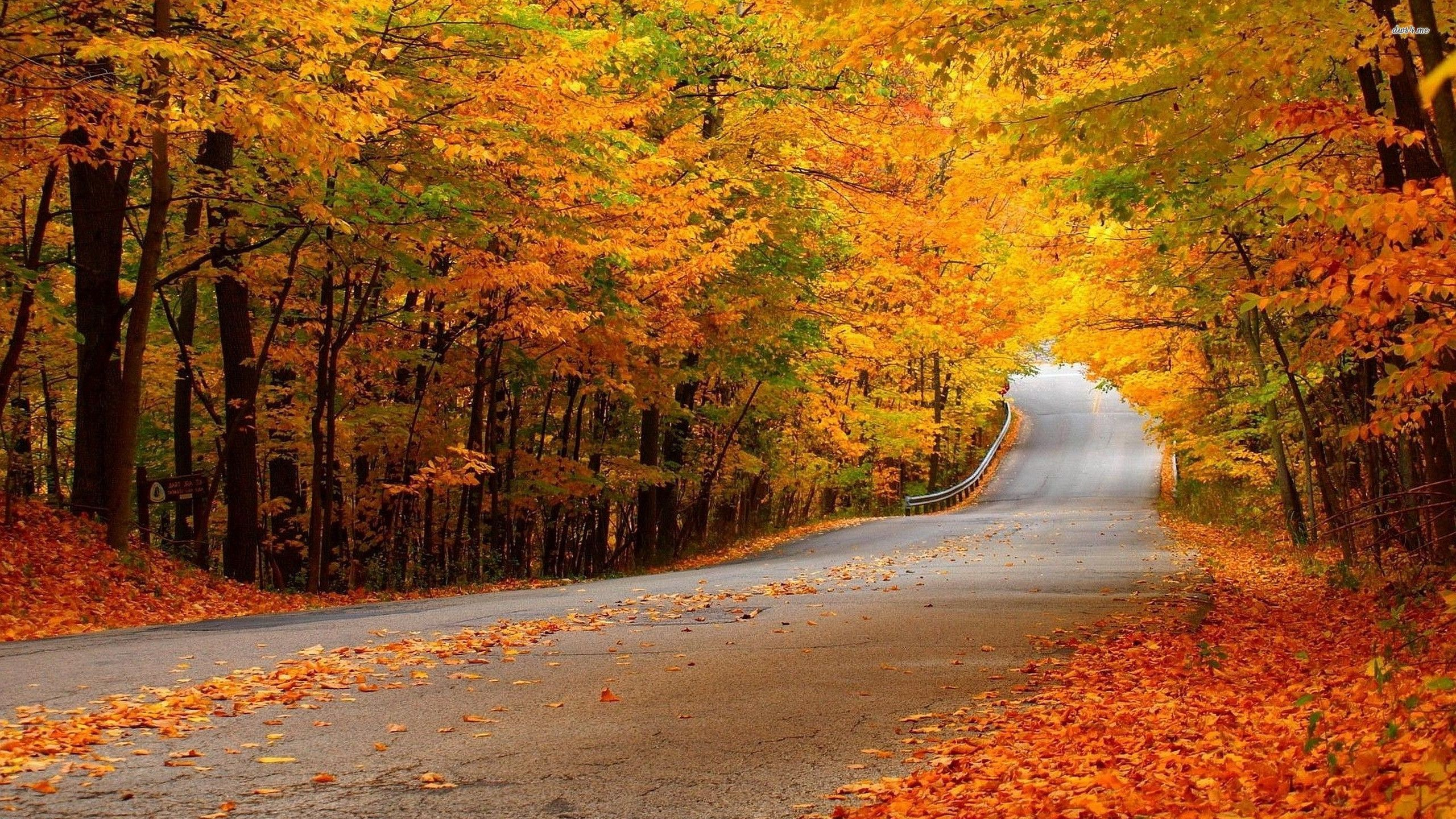 2560x1440 Fall Fairy Garden backgrounds | Road through the autumn woods wallpaper