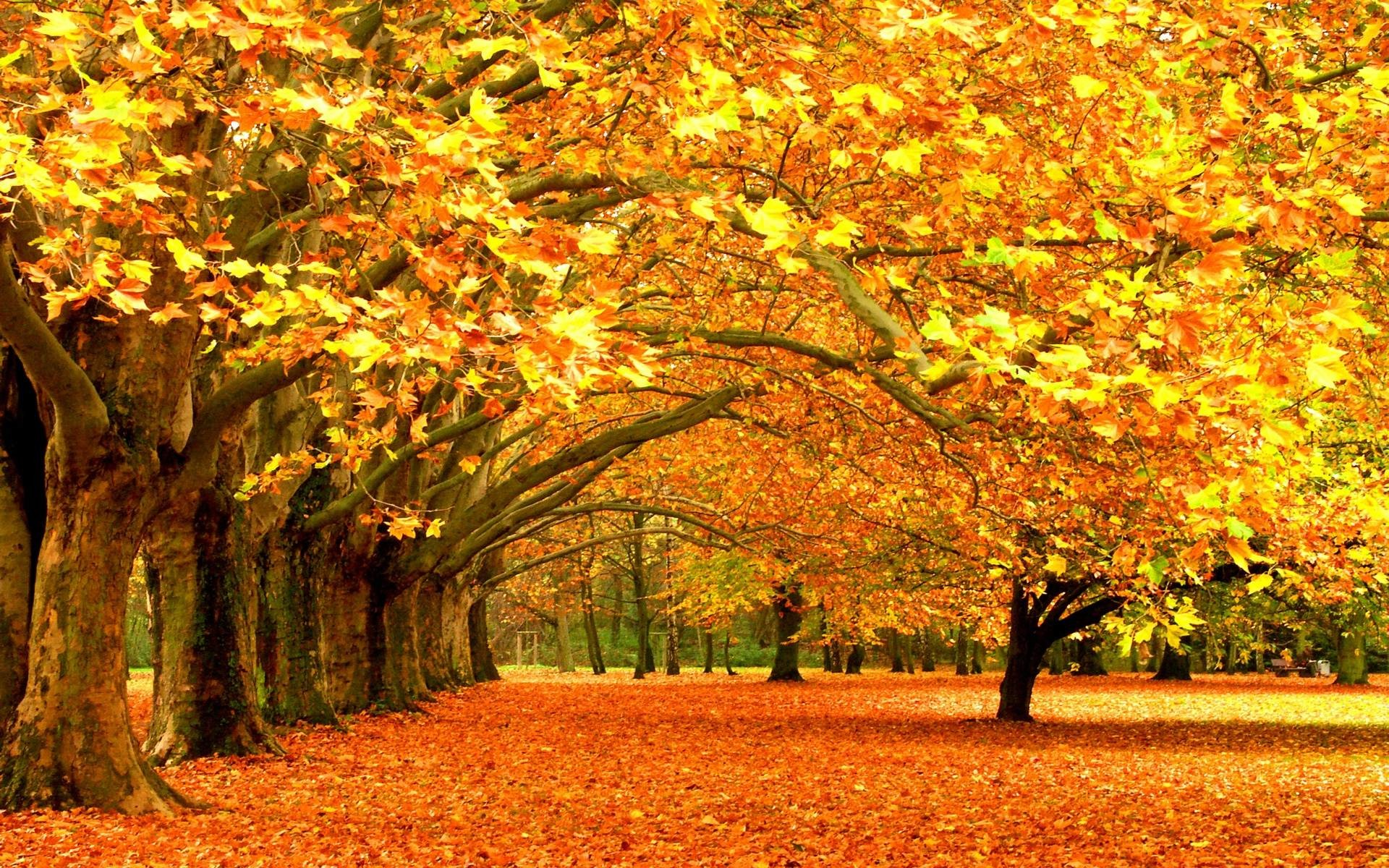 1920x1200 High resolution fall backgrounds for computer clipart