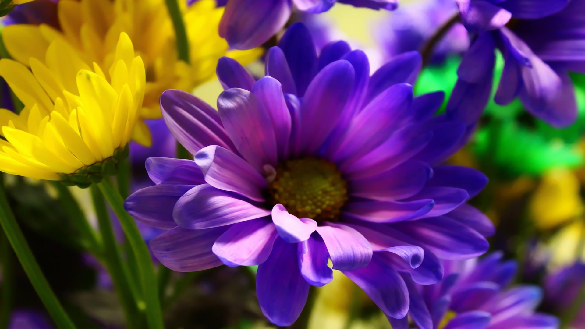 May Flowers Wallpaper HD Desktop (66+ images)