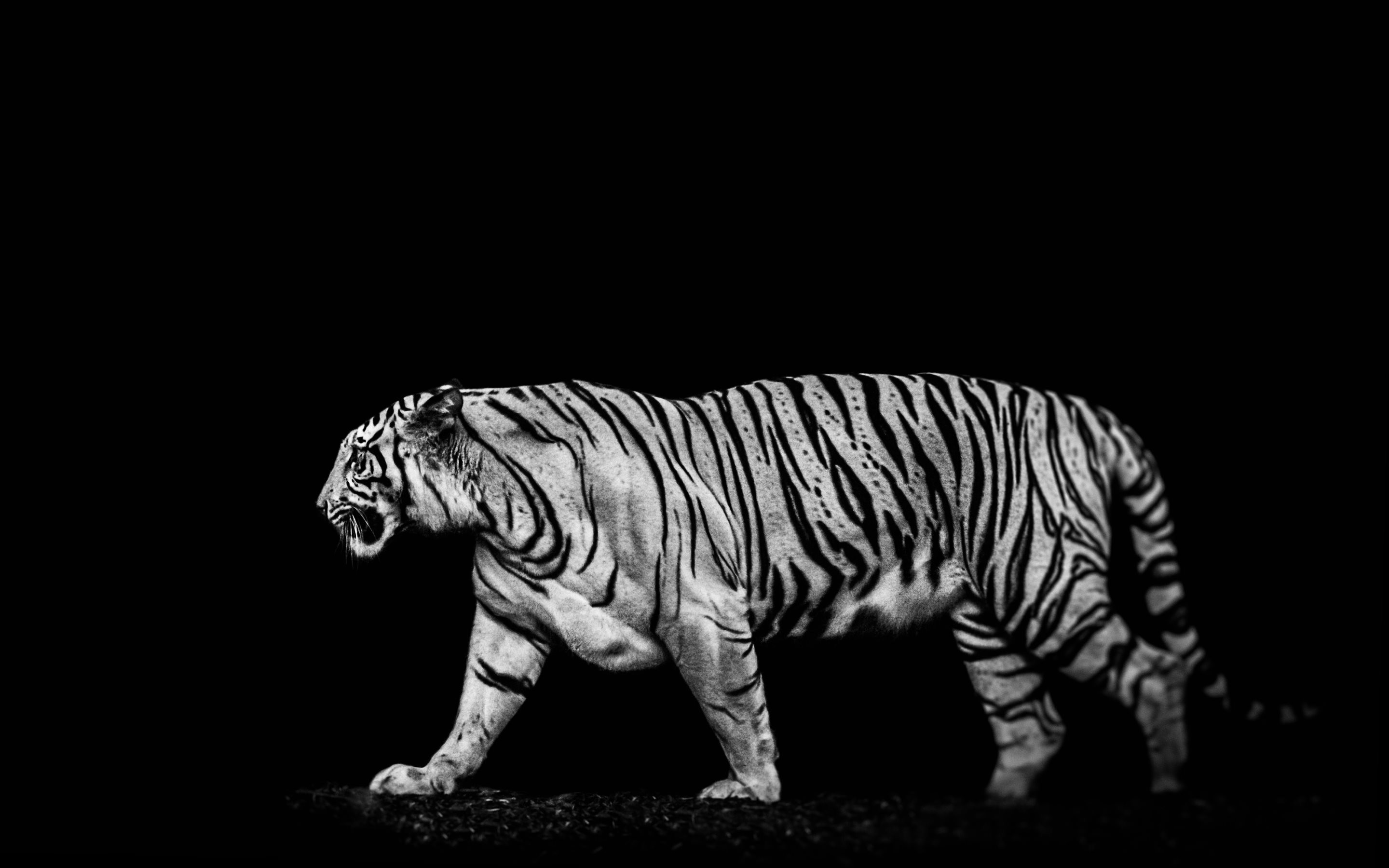 4k black wallpaper 57 images - Ultra hd animal wallpapers ...