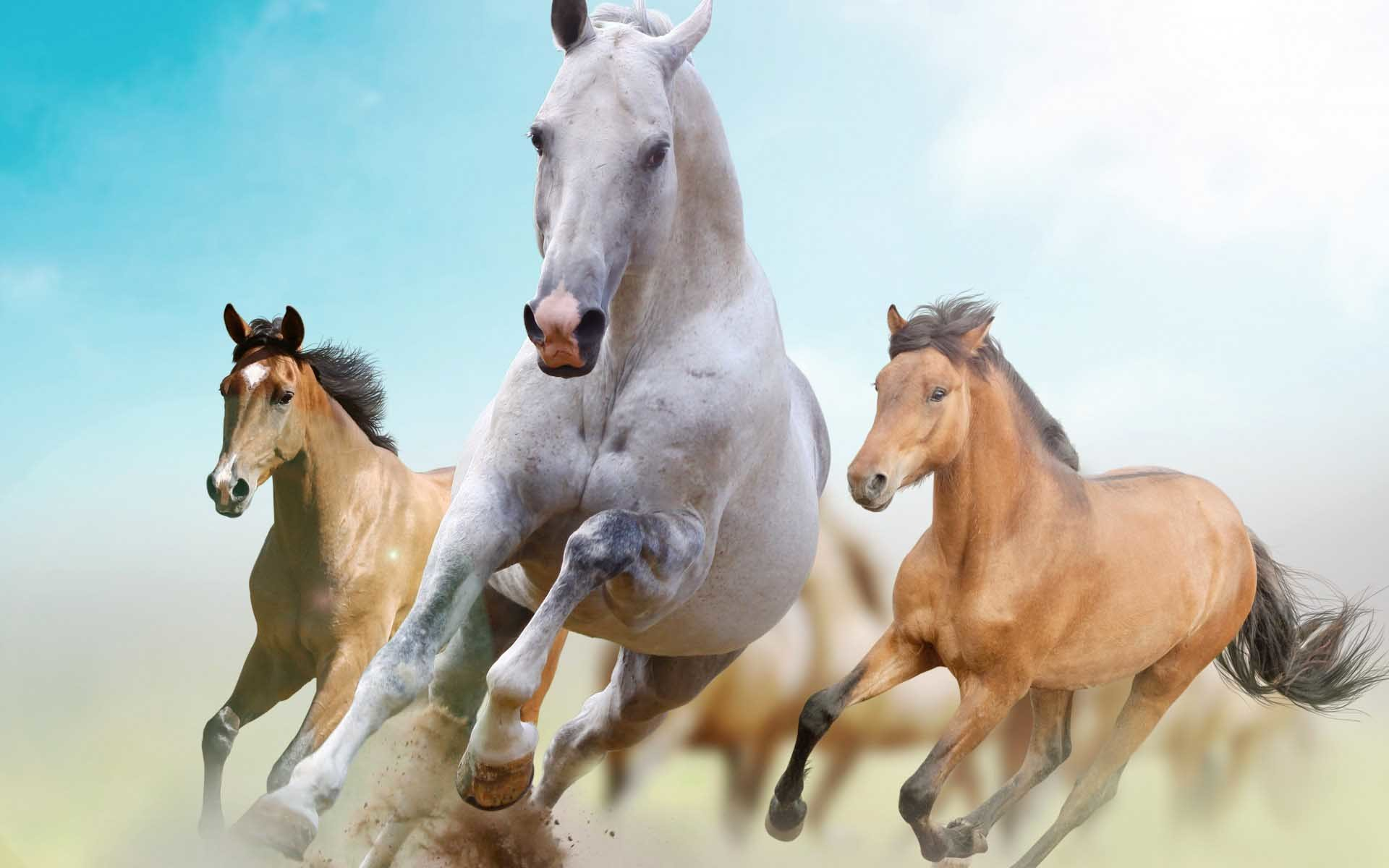 1920x1200 Beautiful Horses Wallpaper | Find tall and beautiful wallpapers of Racing  Horse to decorate desktop .