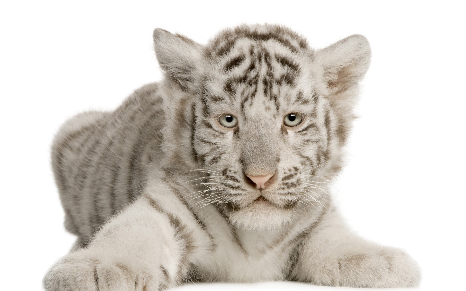 Cute Baby Tiger Wallpaper (68+ images)