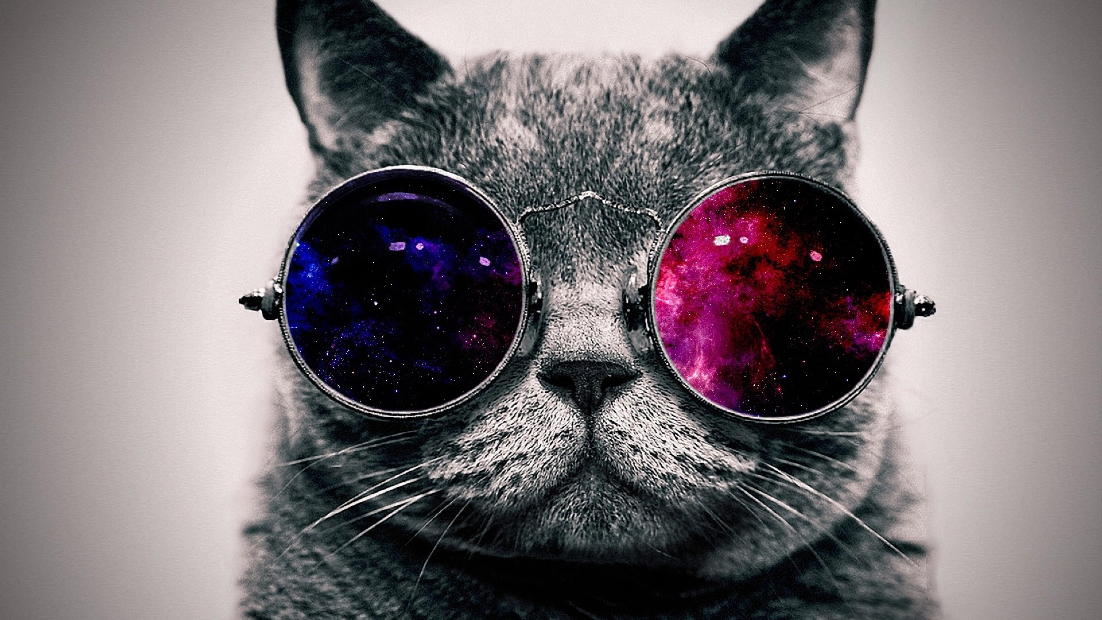 Funny Cat Wallpapers For Desktop 69 Images