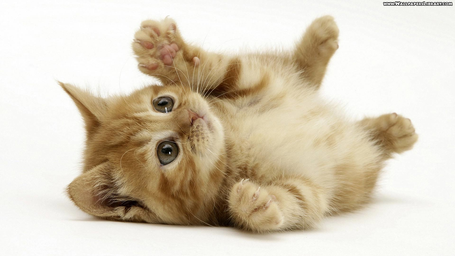 1920x1080 Cute Kittens Wallpapers 1080p