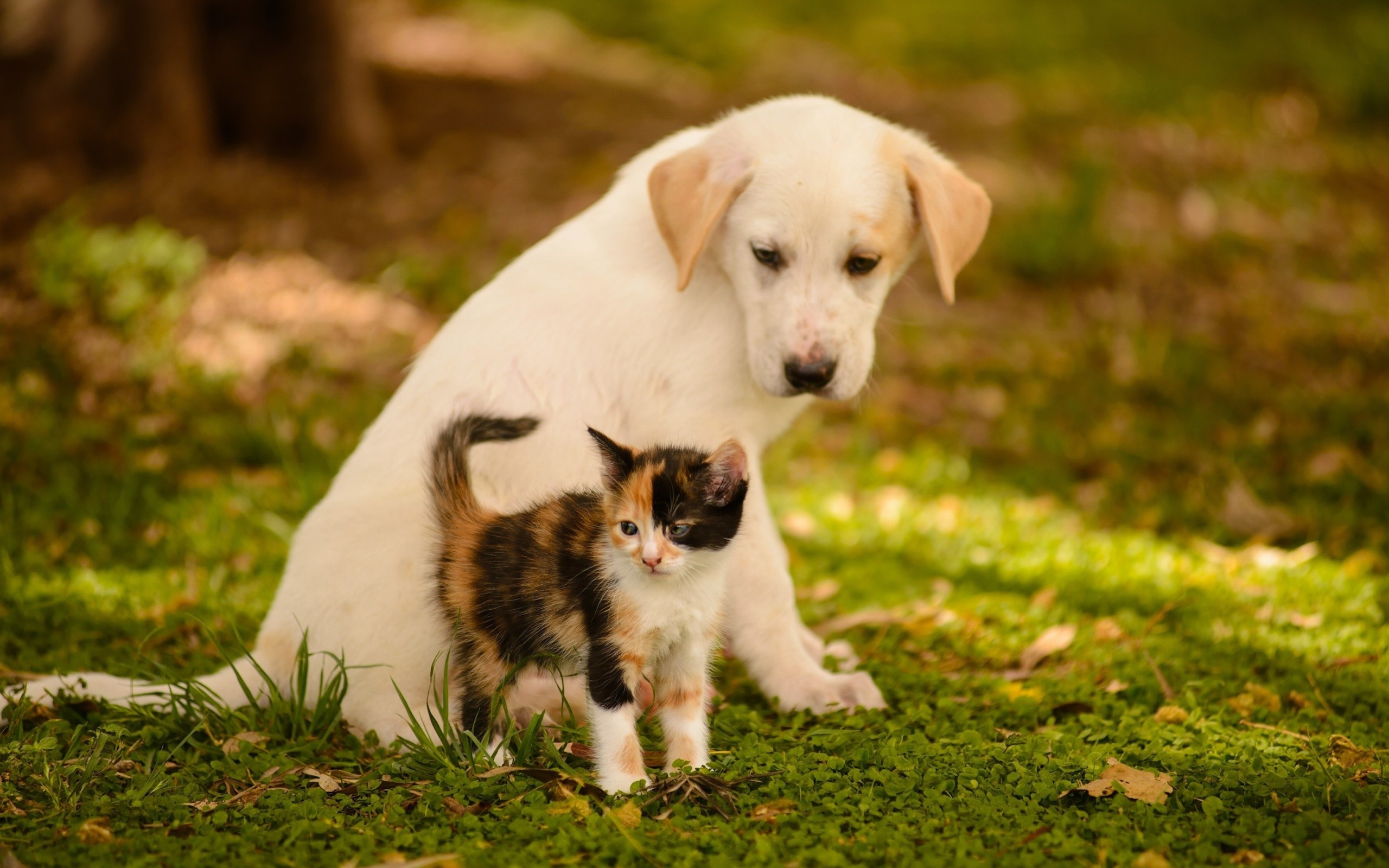 Cute Puppies And Kittens Wallpaper: Cute Puppy And Kitten Wallpapers (58+ Images