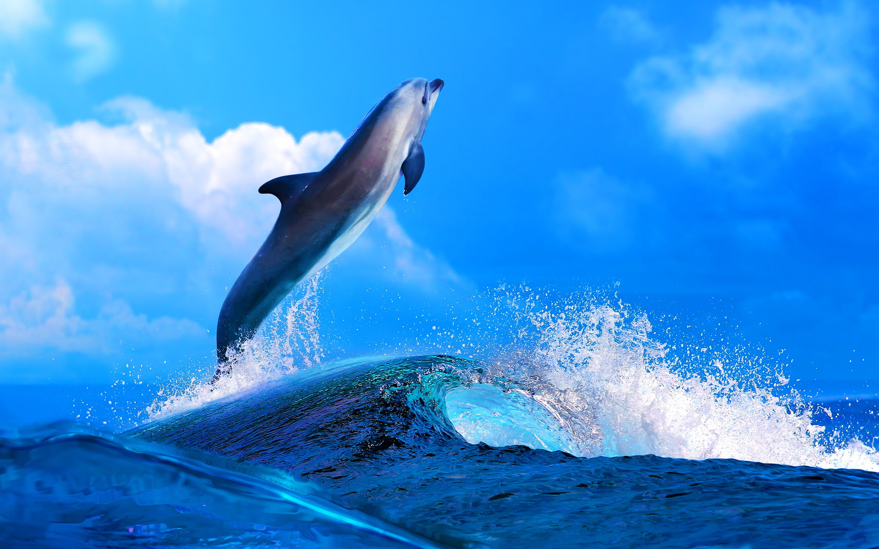 2880x1800 dolphin wallpaper background 10861