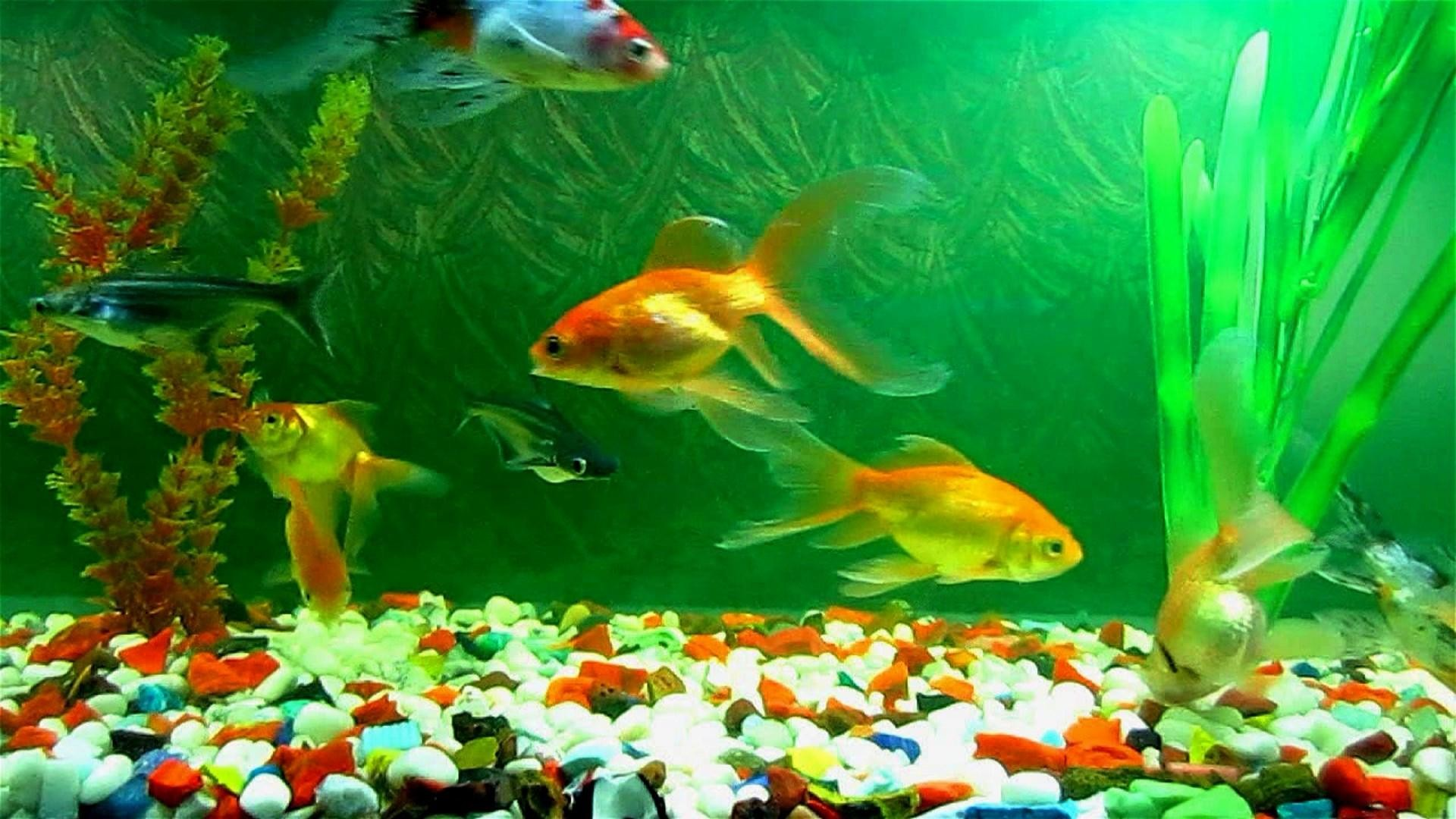 Fish Tank Wallpaper (68+ images)
