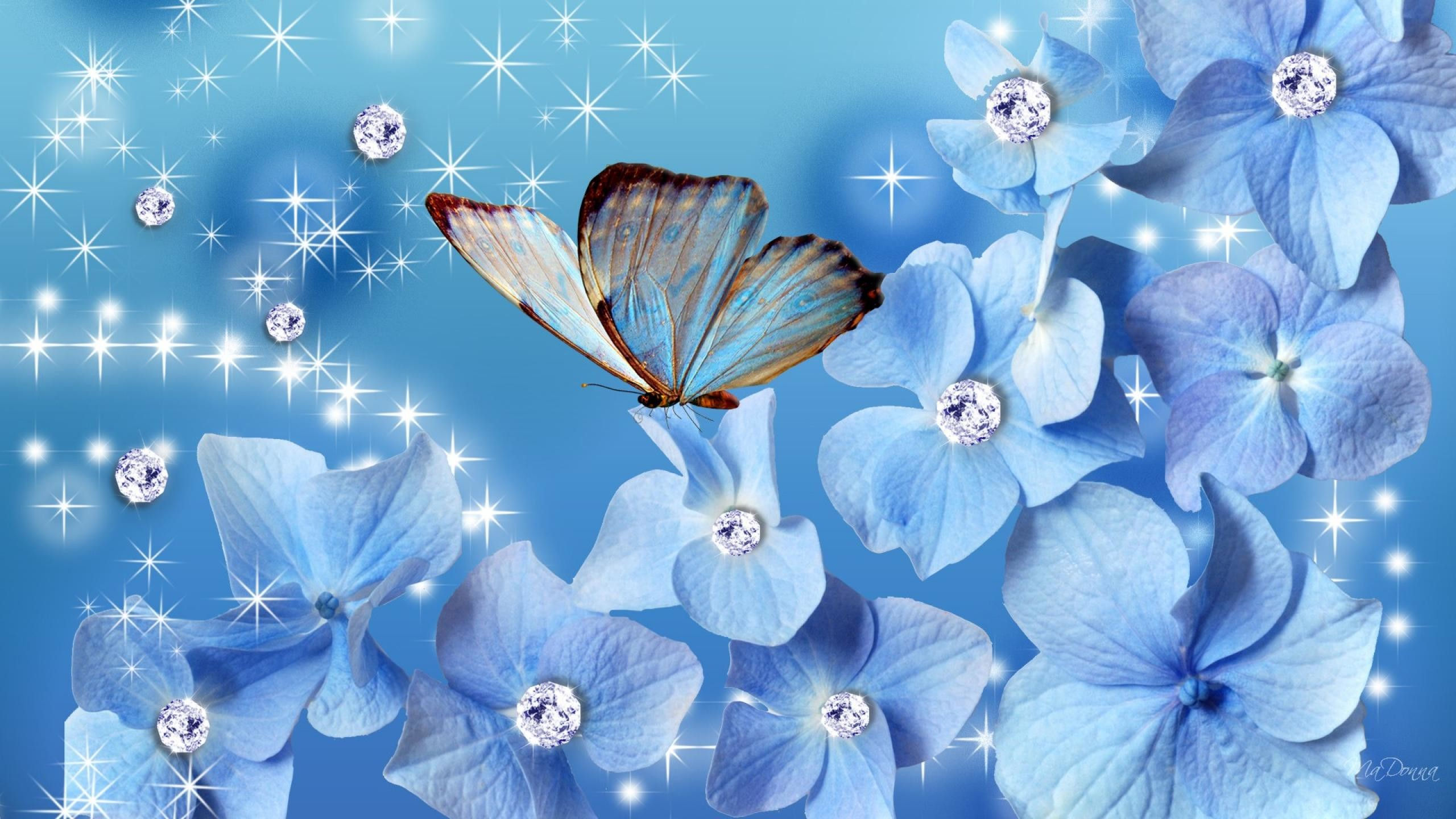 2560x1440 Blue Butterfly Wallpapers Photo Animated Wallpaper Desktop And Blue  Butterfly Wallpapers Wallpapers)