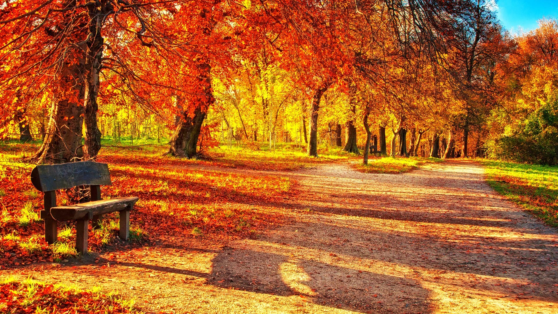 1920x1080 Download Autumn Leaves Wallpaper Desktop #x0ray » hdxwallpaperz.com