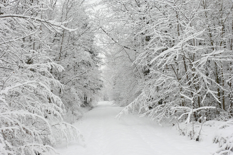 1920x1080 Winter Trees Beautiful Nature Snow Wallpaper Scenes Free