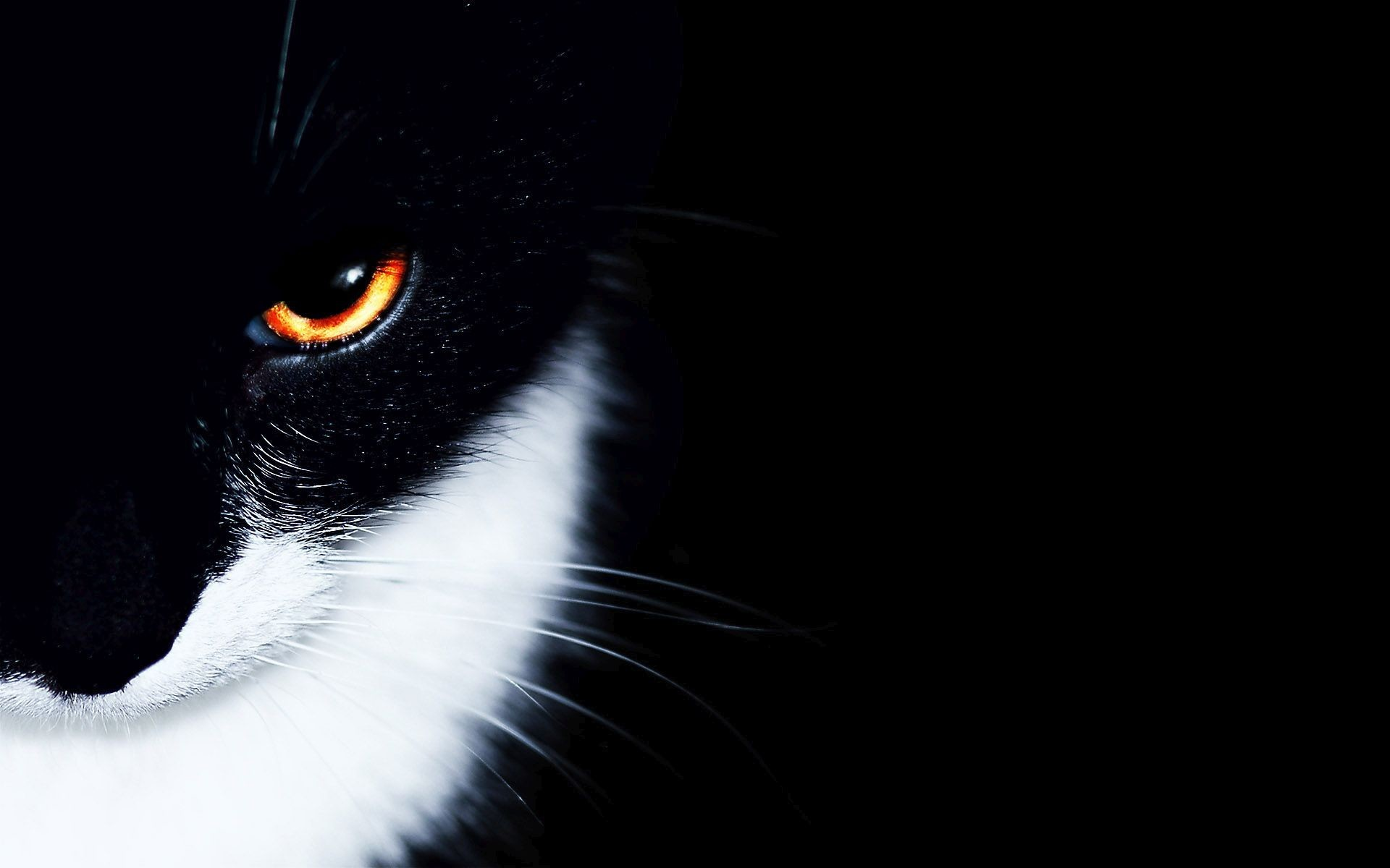 Black And White Cat Wallpaper 77 Images