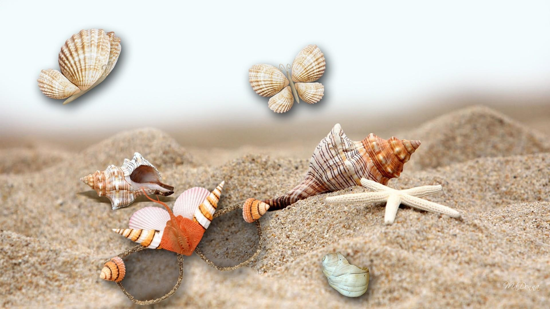 1920x1080 Sea Shells By The Sea