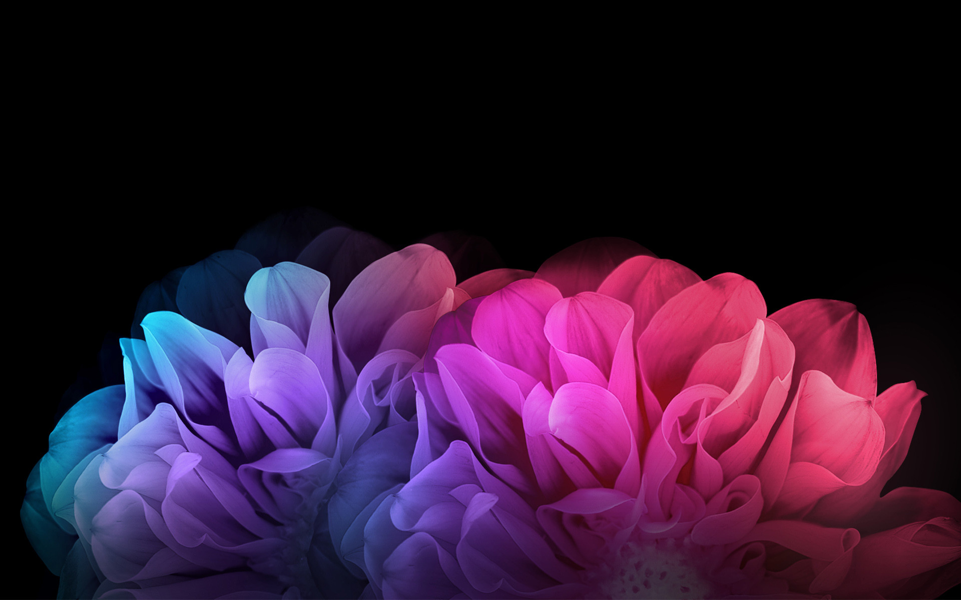 1920x1200 Colorful Flowers Dark Background
