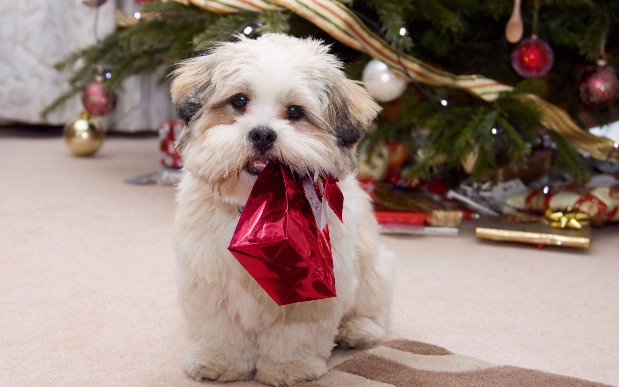 2560x1600 Xmas Stuff For > Merry Christmas Puppies Wallpaper