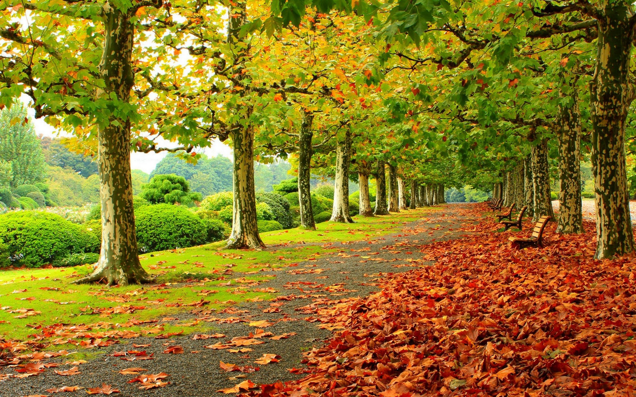 2560x1600 ... Autumn Tree Wallpaper - WallpaperSafari ...