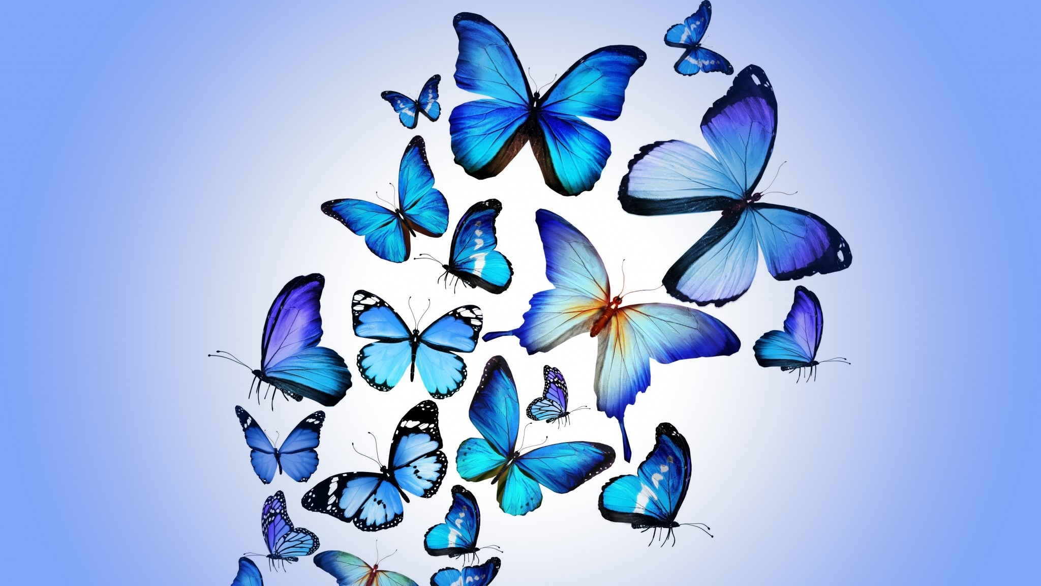 Download Wallpaper High Quality Butterfly - 448585  2018_73496.jpg