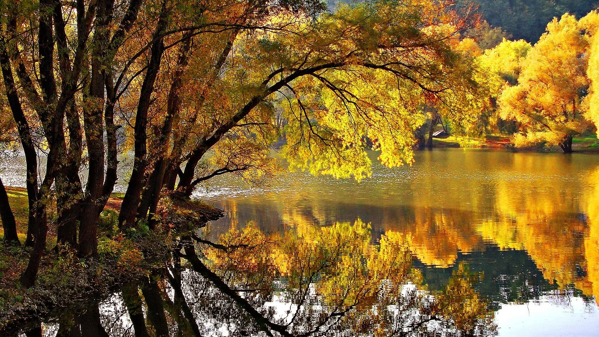 1920x1080 Leaves Tag - Park Golden Foliage Lovely Reflections Shore Pond Water Nature  Yellow Branches Silence Calmness
