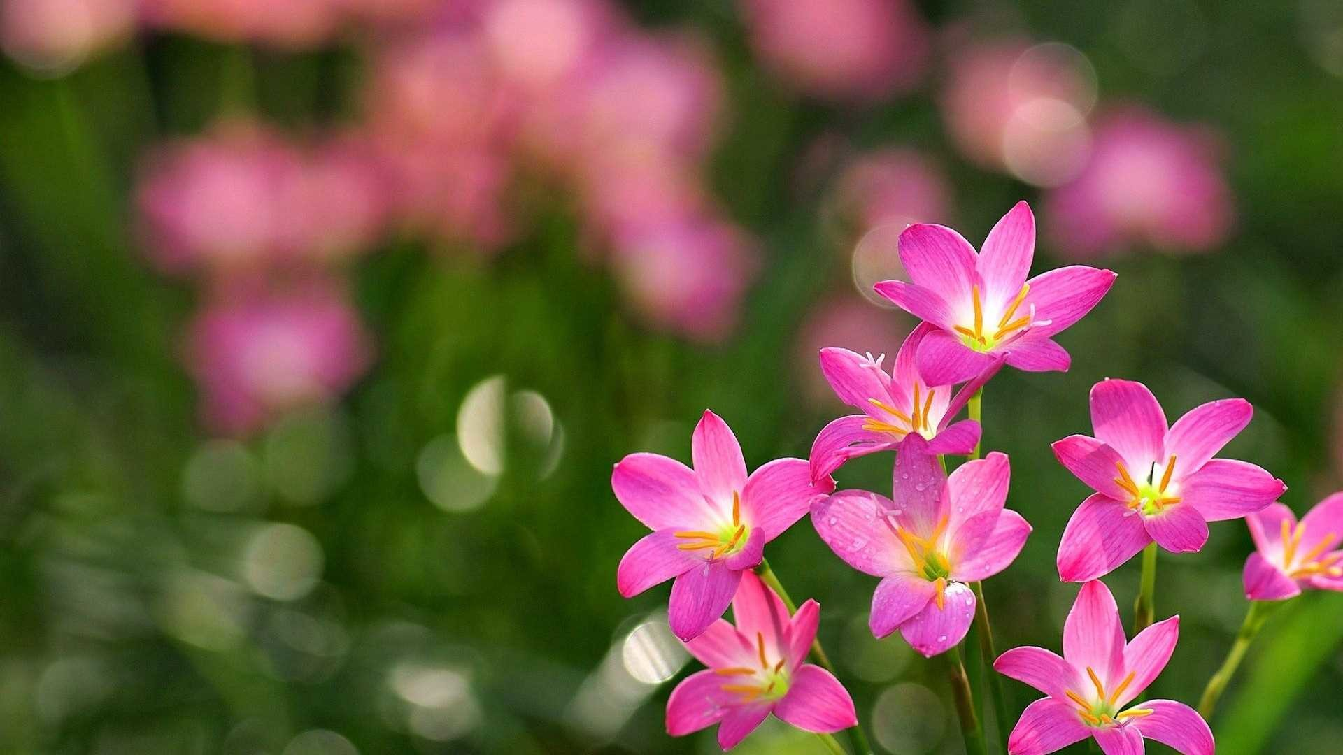 Beautiful floral backgrounds 44 images 1920x1200 flower wallpaper 1 flower wallpaper 2 flower wallpaper 3 izmirmasajfo