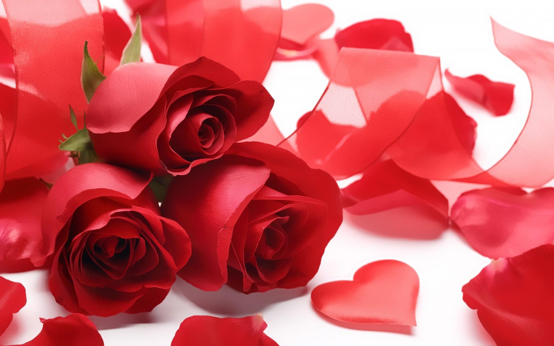 Red Rose Love Wallpaper (55+ images)
