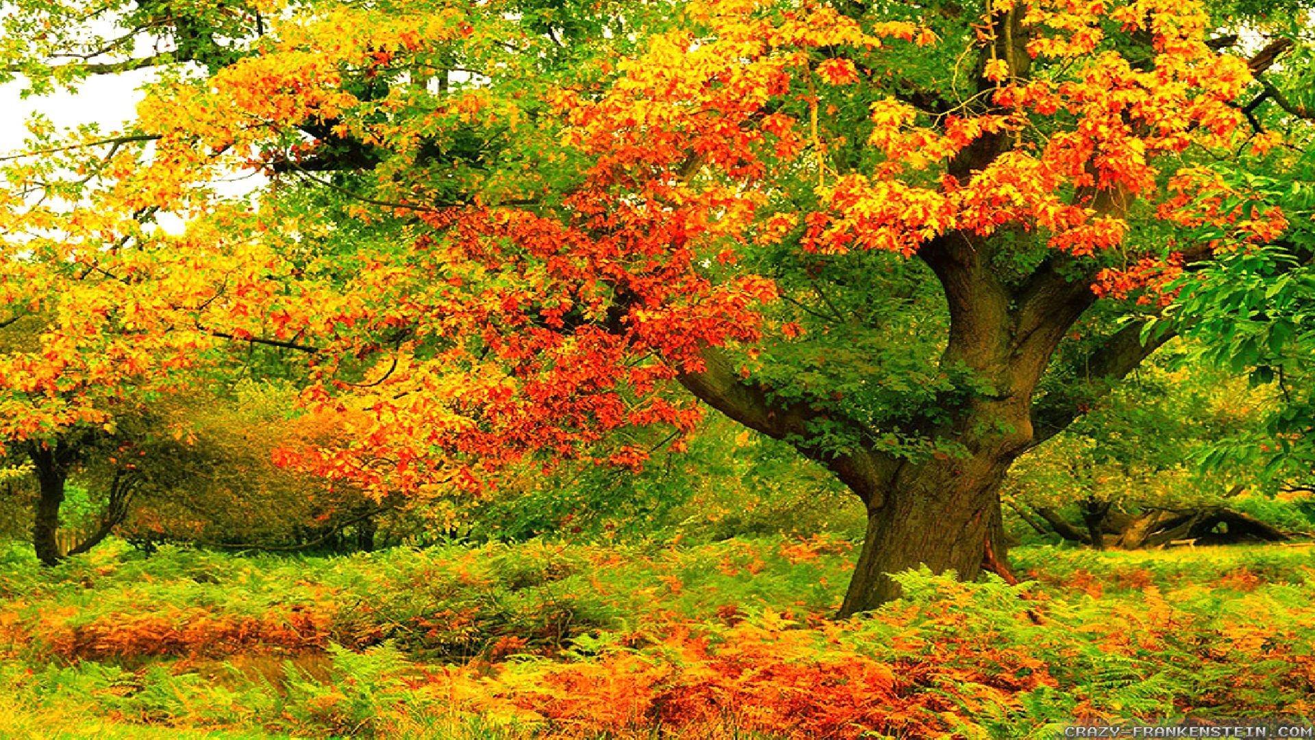 Autumn Tree Wallpaper (61+ images)