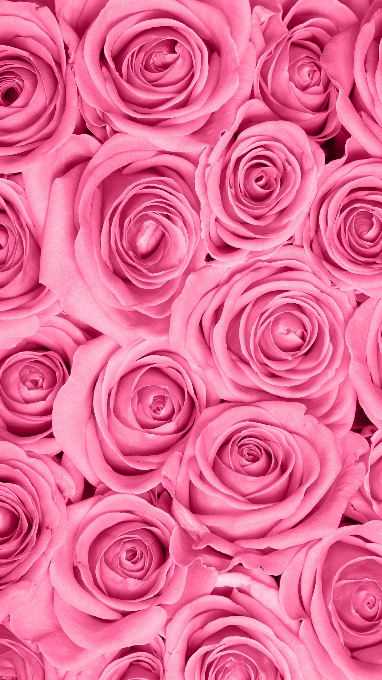 Pink roses wallpaper 64 images - Pink rose hd wallpaper for mobile ...